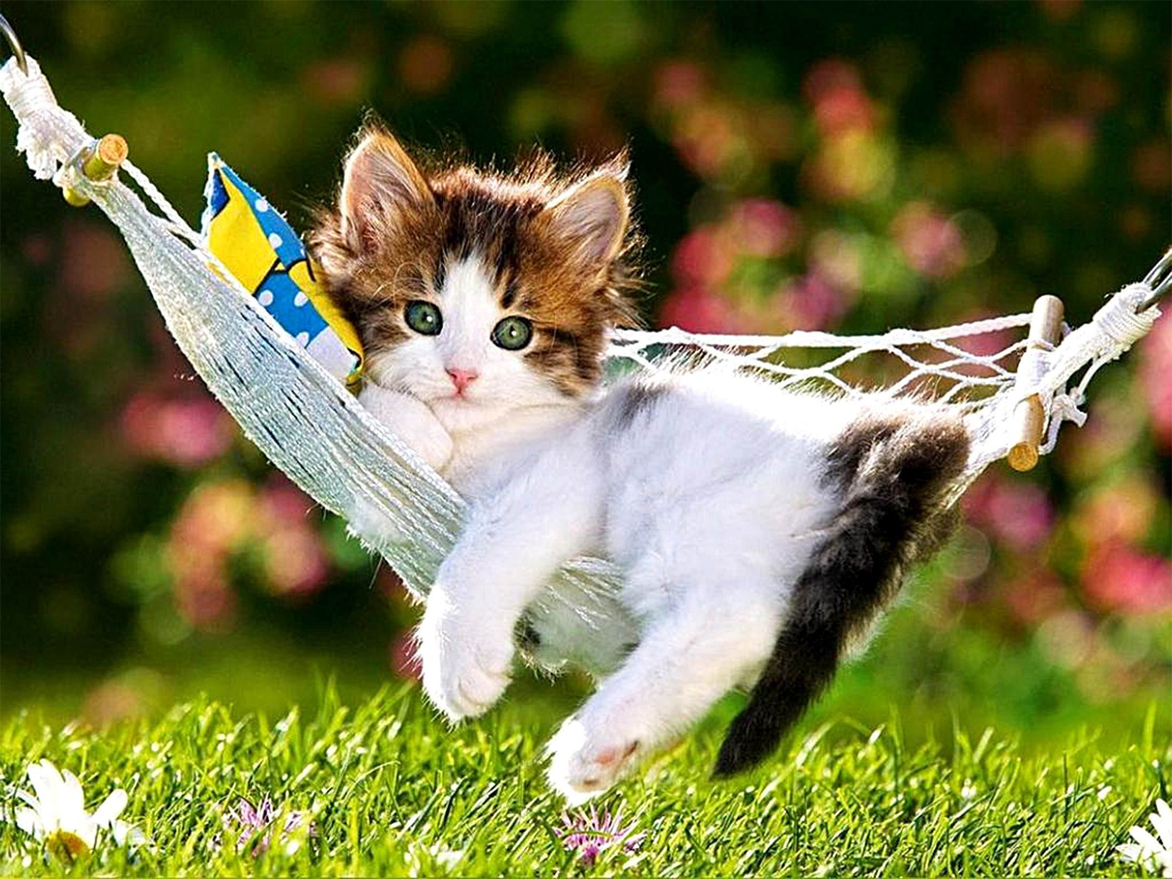 Cute Cat Backgrounds Wallpapertag
