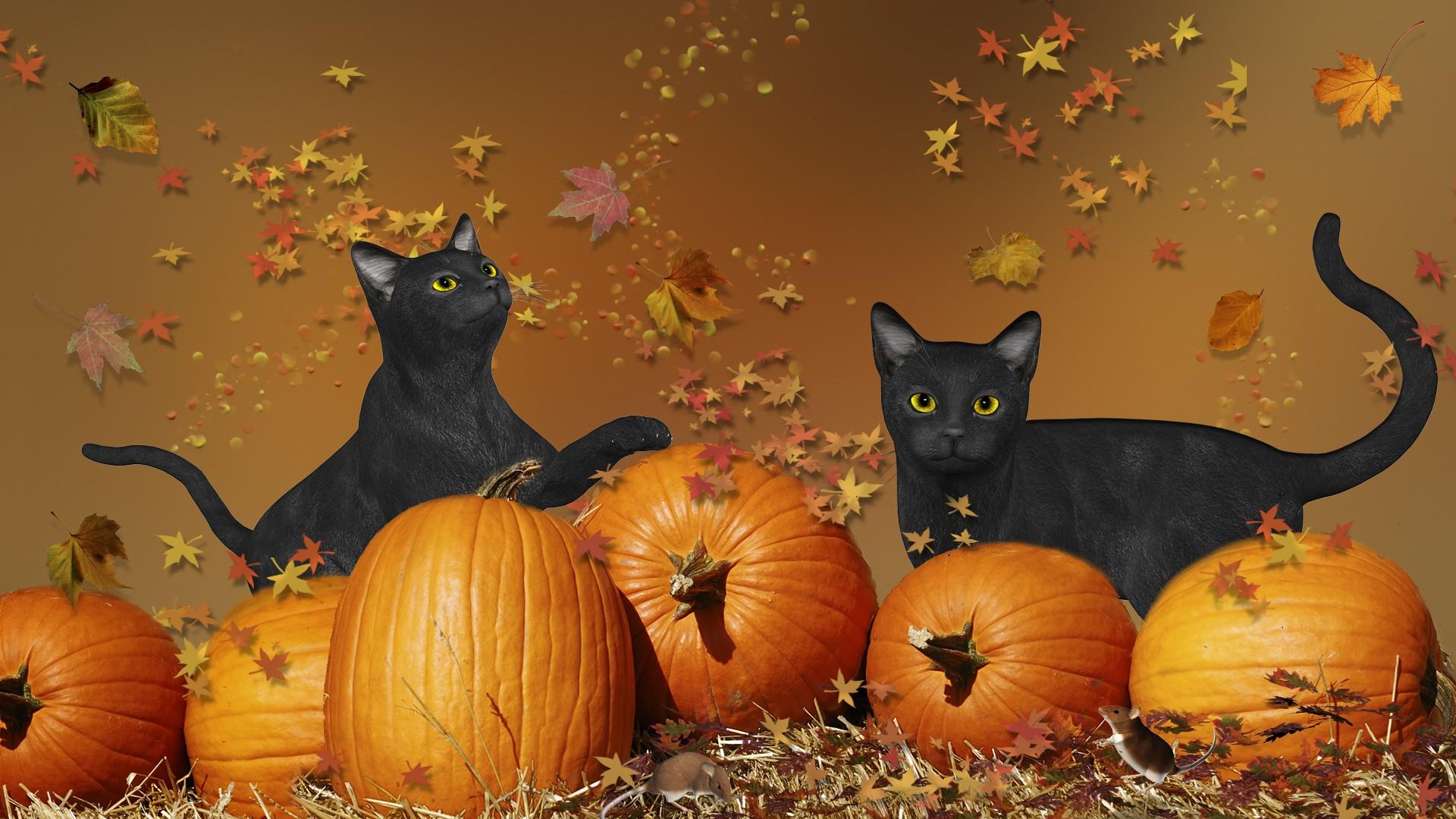 Cute Halloween wallpaper ·① Download free beautiful HD ...