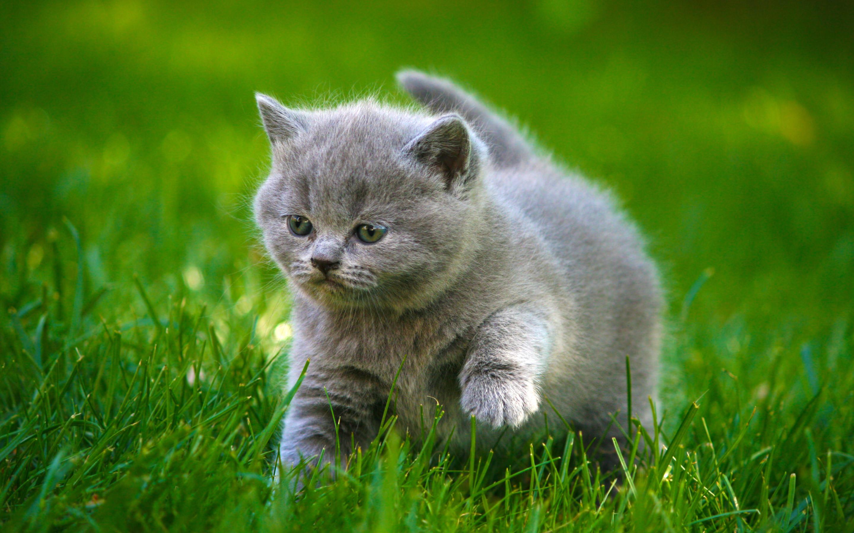 Baby kitten wallpaper wallpapertag - Kitten wallpaper ...