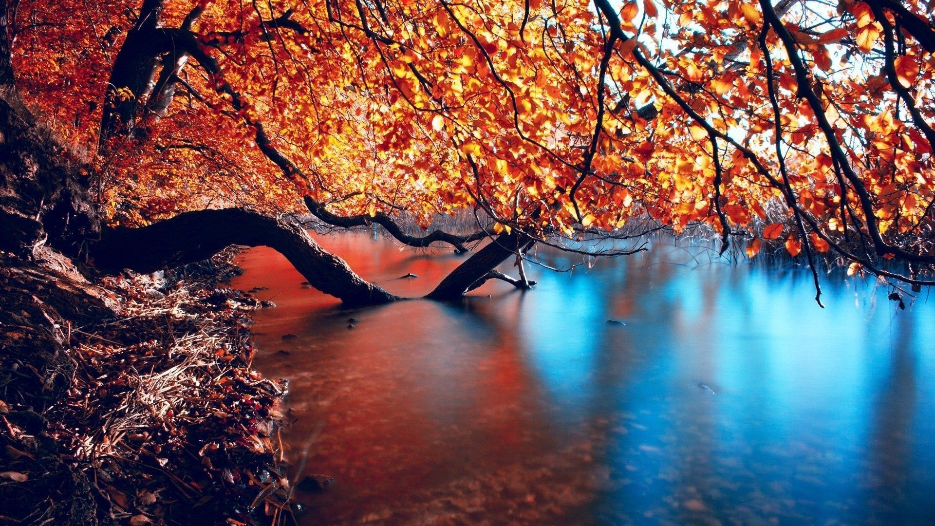 Fall wallpaper HD Download free wallpapers for desktop mobile
