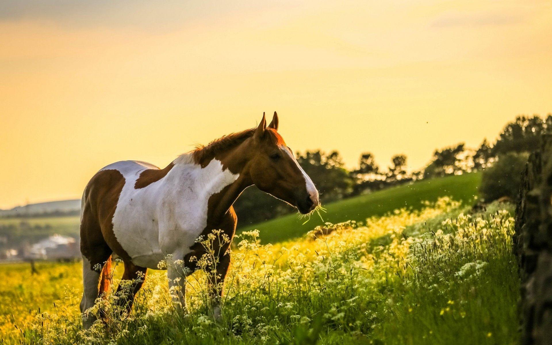 Horses Wallpaper 1