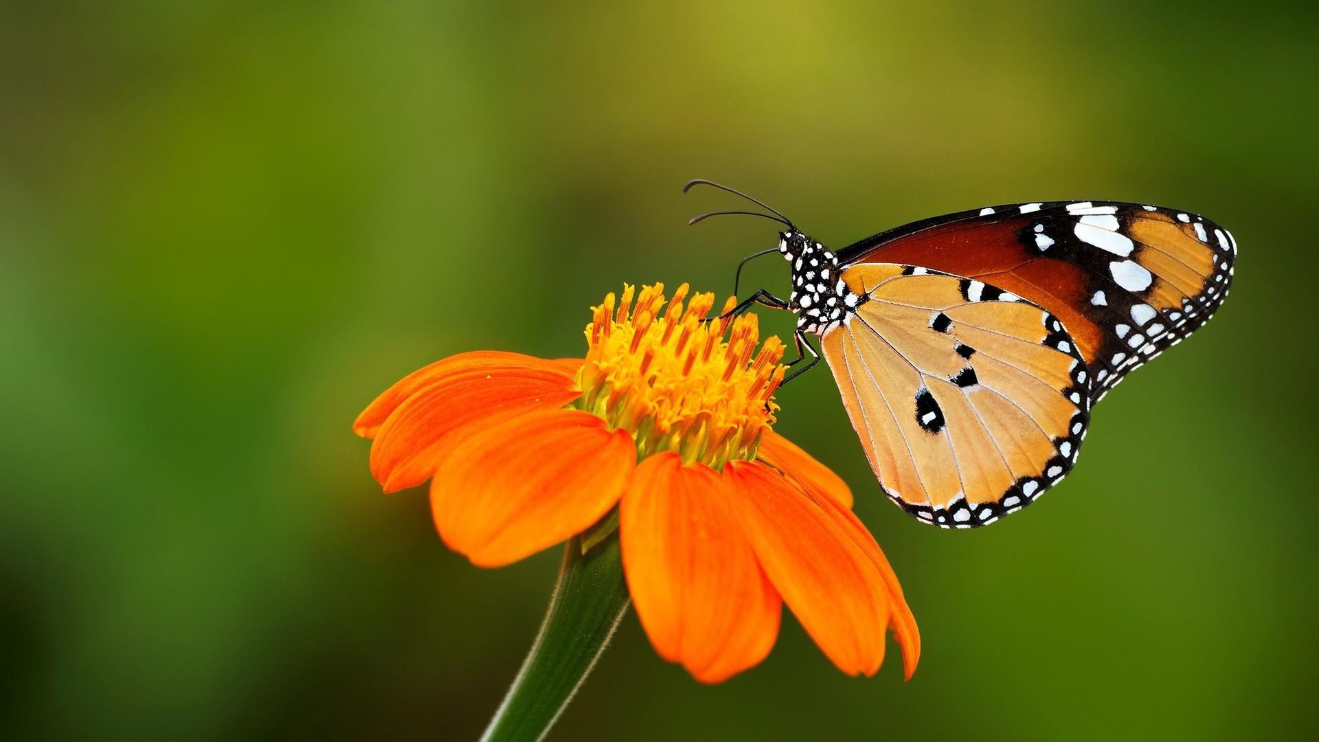 Разные бабочки  № 2033720 загрузить