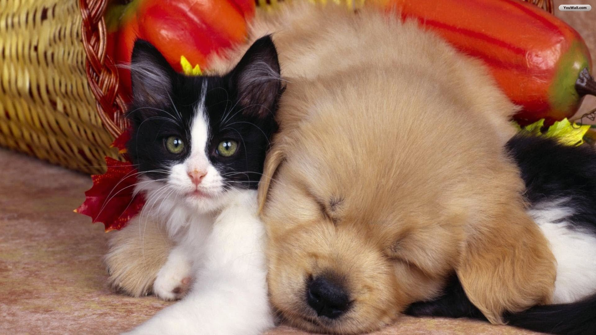 Dog And Cat Wallpaper