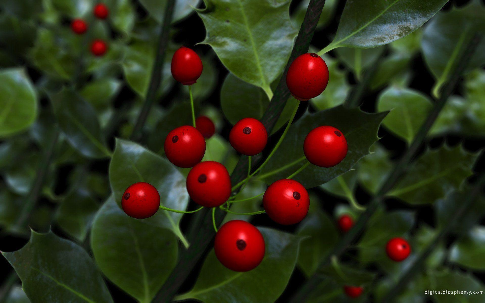 Christmas Holly Wallpapers 183 ① Wallpapertag