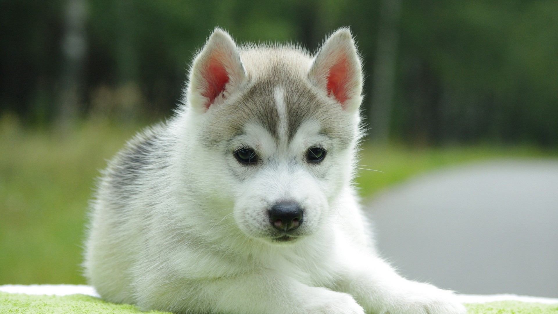 Puppy Wallpaper ·① Download Free Cool Backgrounds For