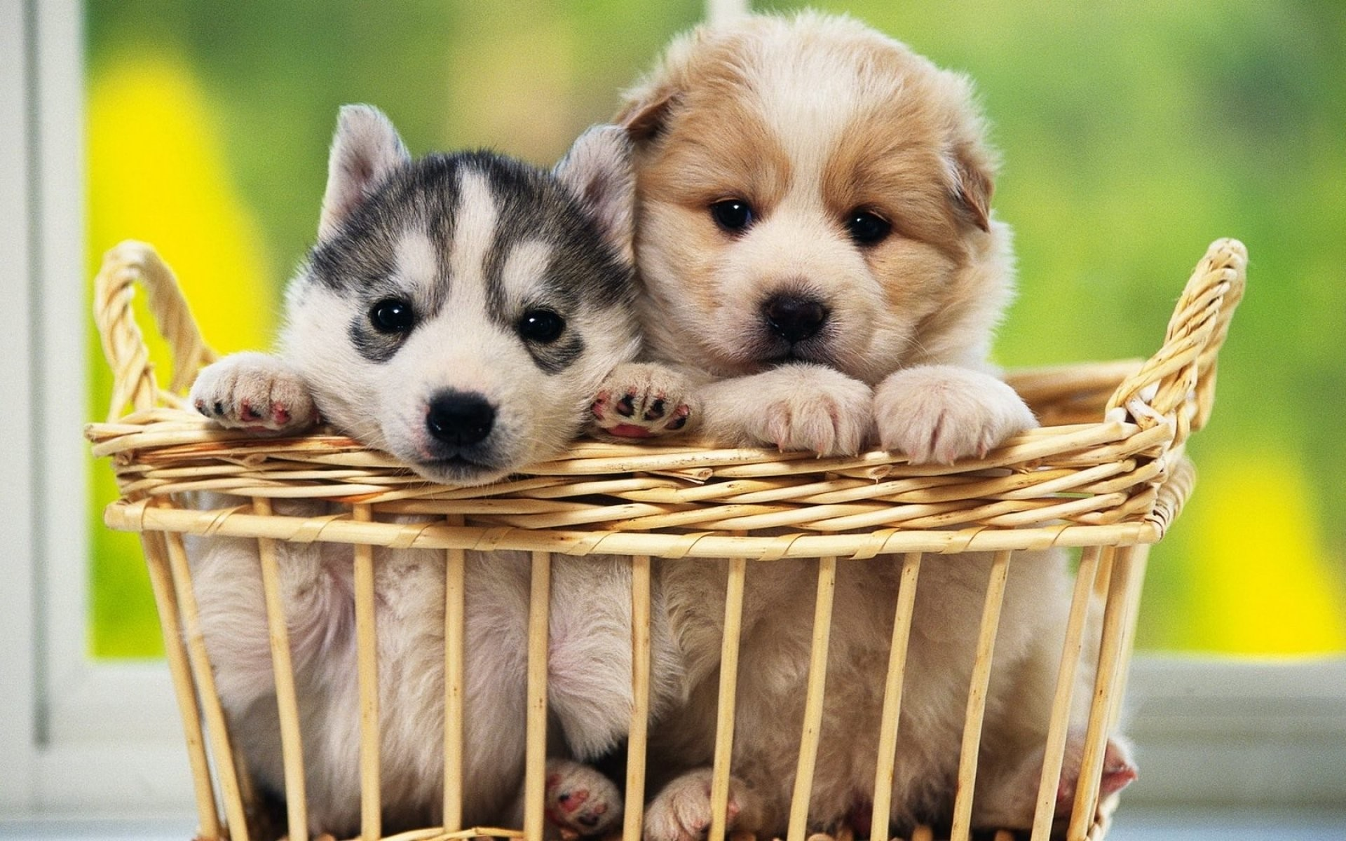 Cute Dogs Wallpaper Wallpapertag