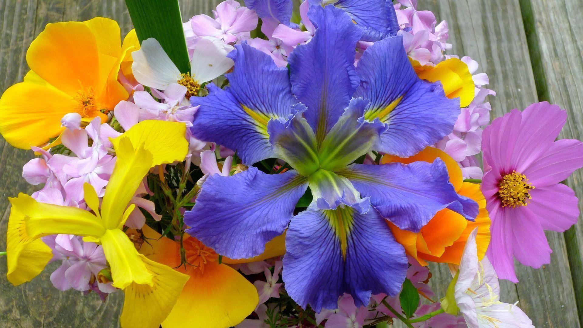 Desktop Wallpaper Spring Flowers ·① WallpaperTag