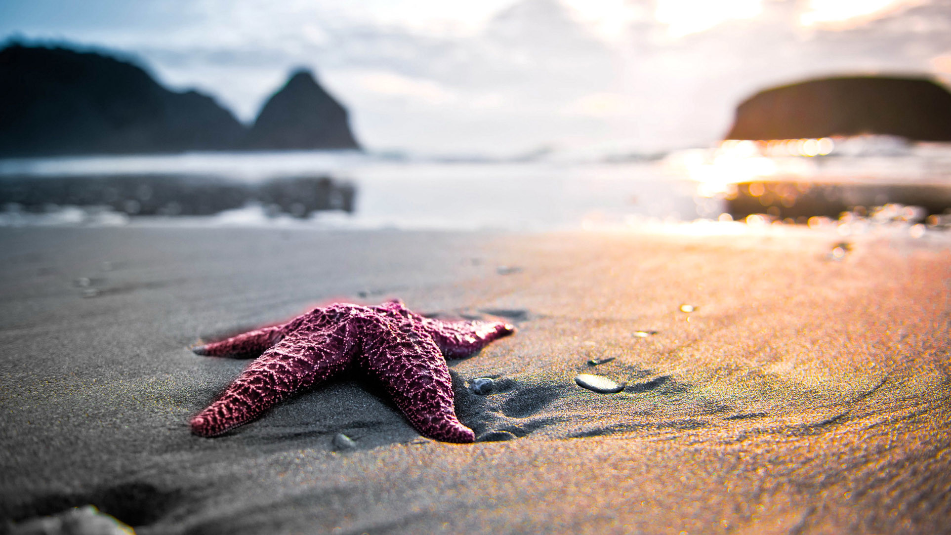 Starfish Backgrounds HD Wallpapers Download Free Images Wallpaper [1000image.com]