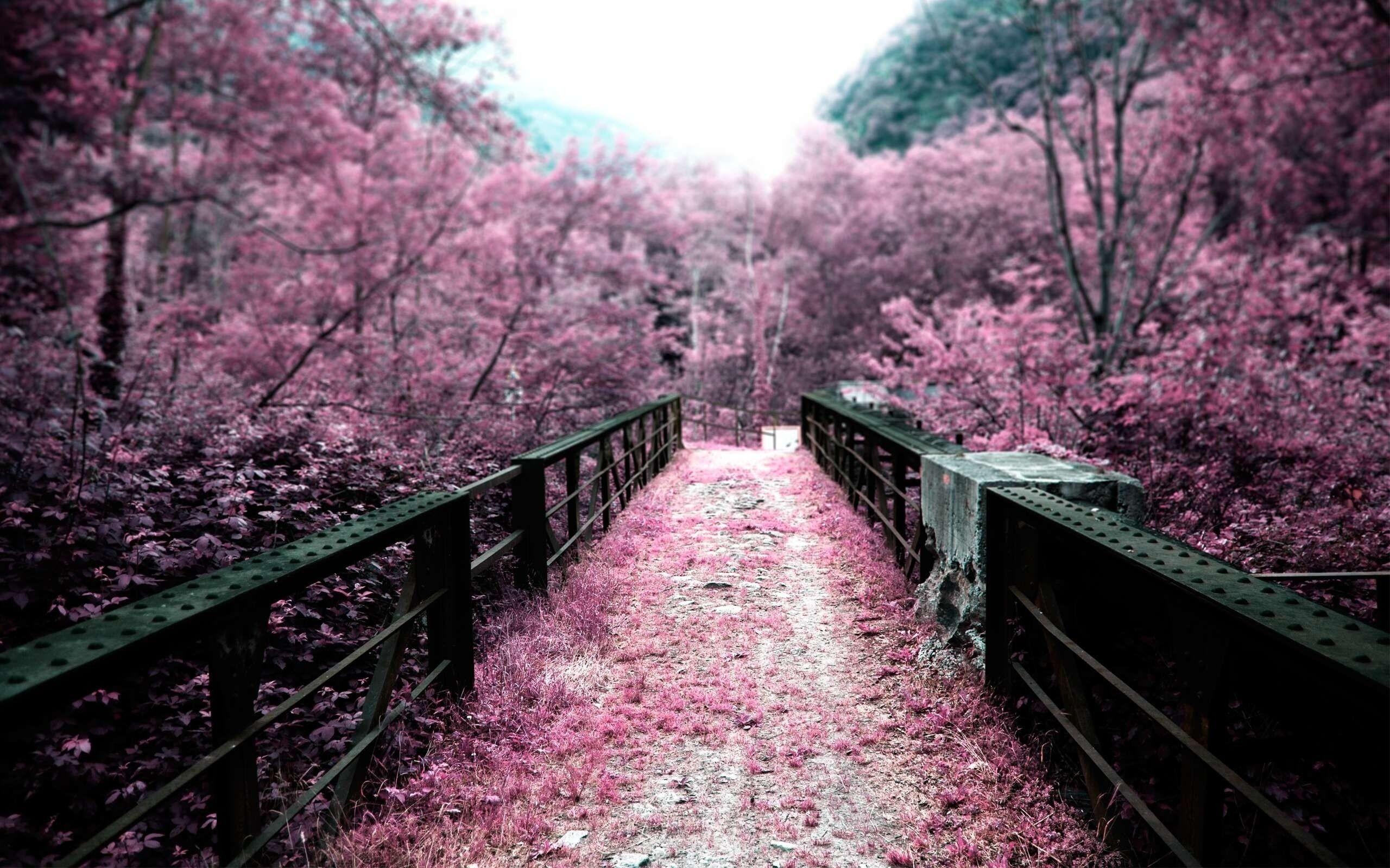 Image result for sakura flower