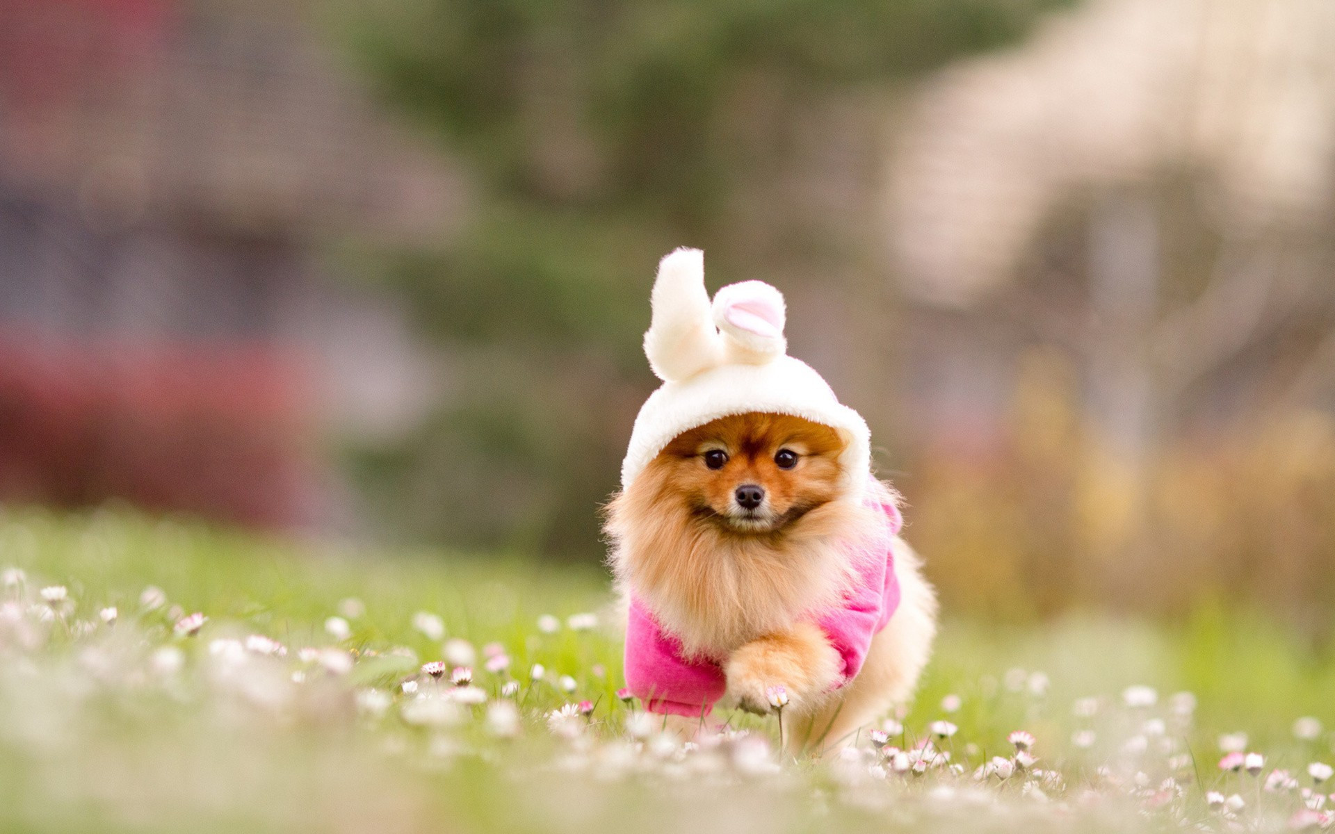Cute Puppy Pictures Wallpaper 1