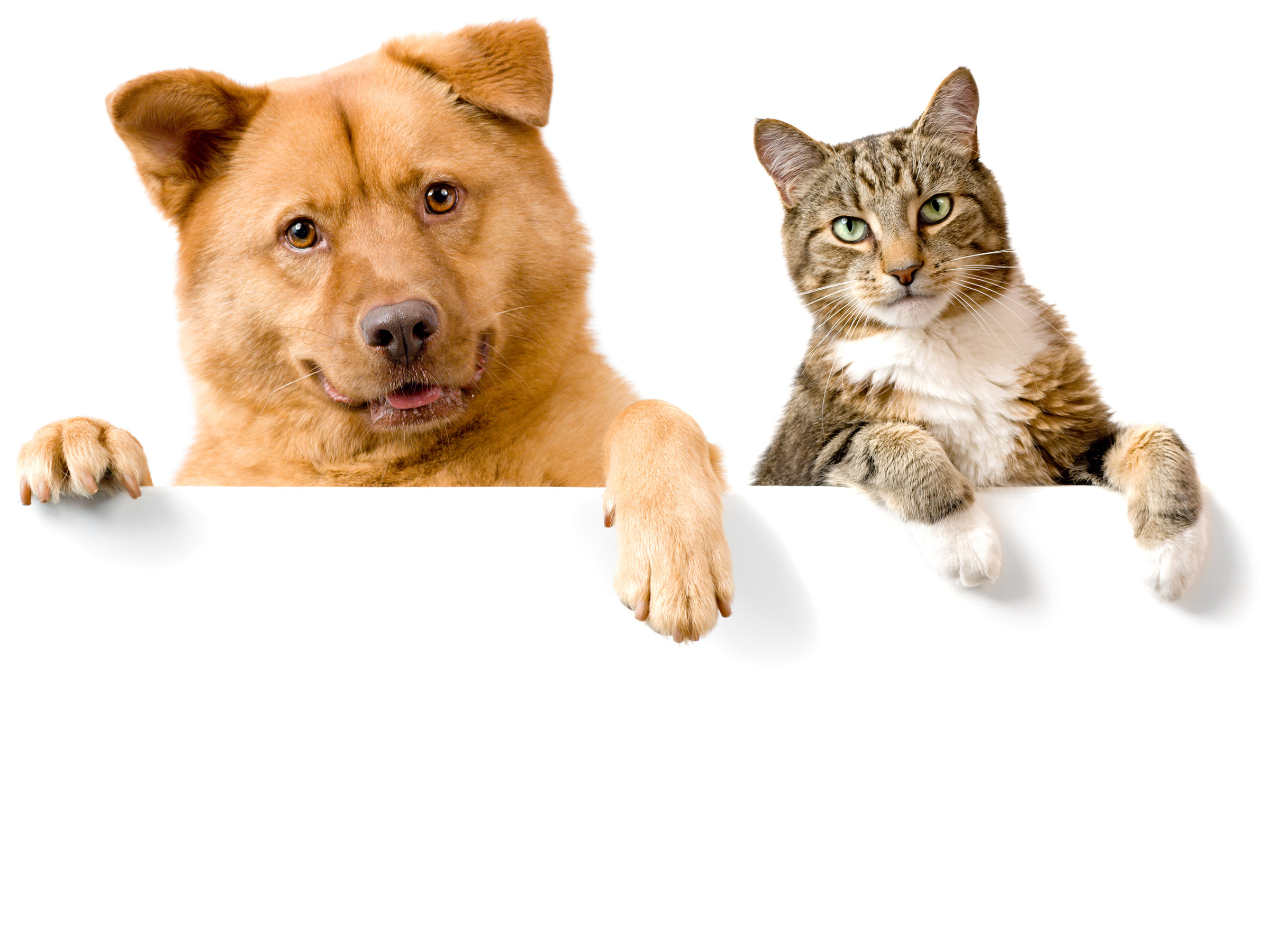 2400x1800 Dog And Cat Wallpaper Background Download Adorable