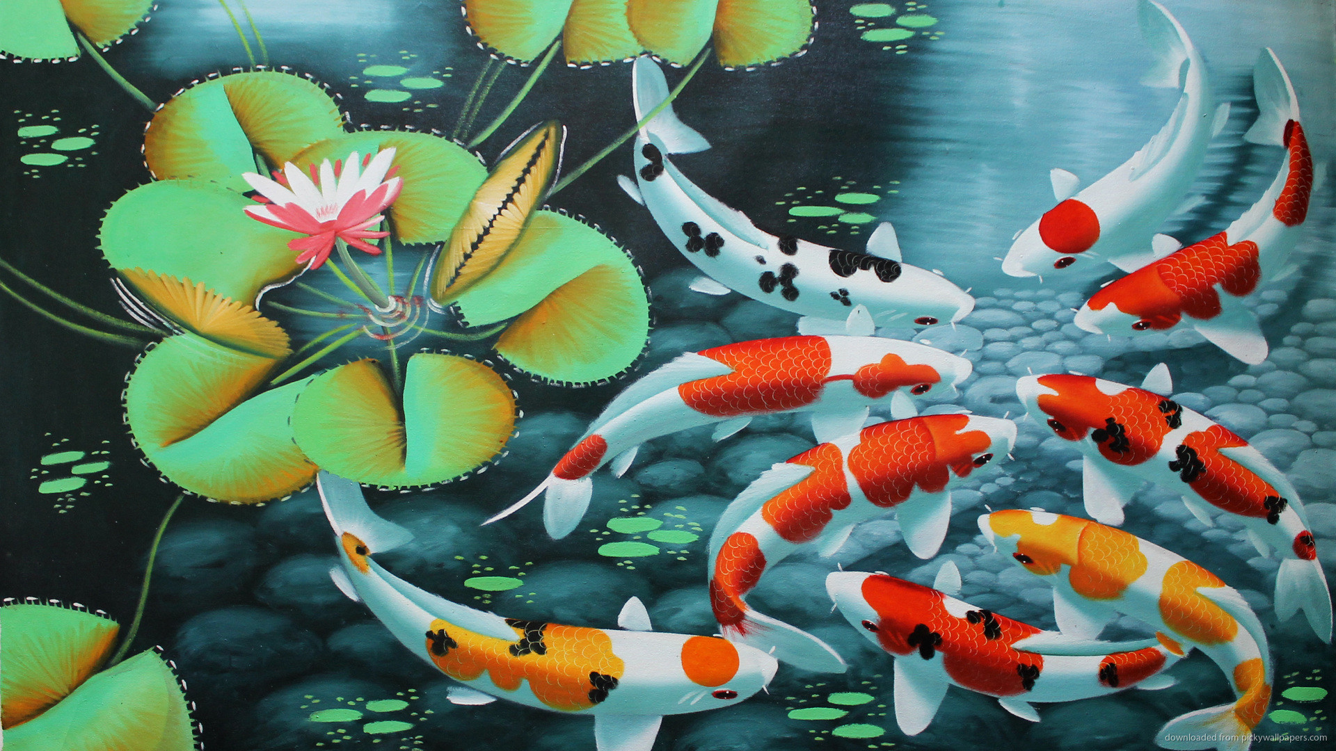 Koi Fish Wallpapers 1
