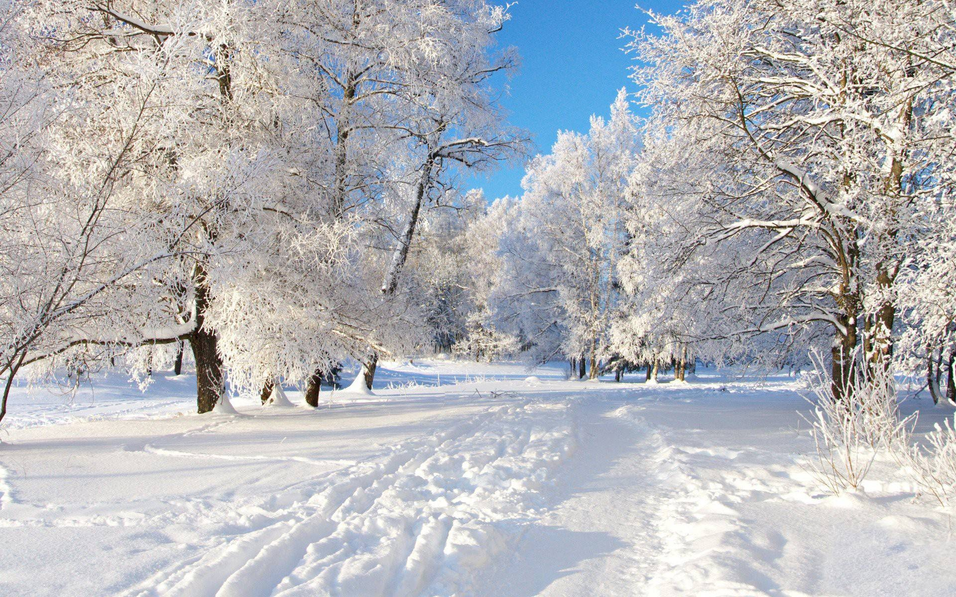 71+ Winter backgrounds ·① Download free HD backgrounds for ...