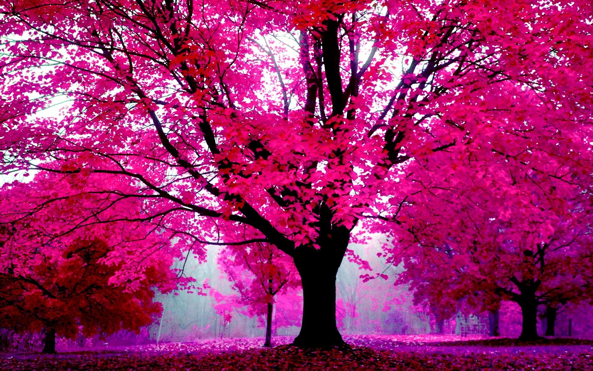 Pink Wallpapers For Desktop ·① WallpaperTag