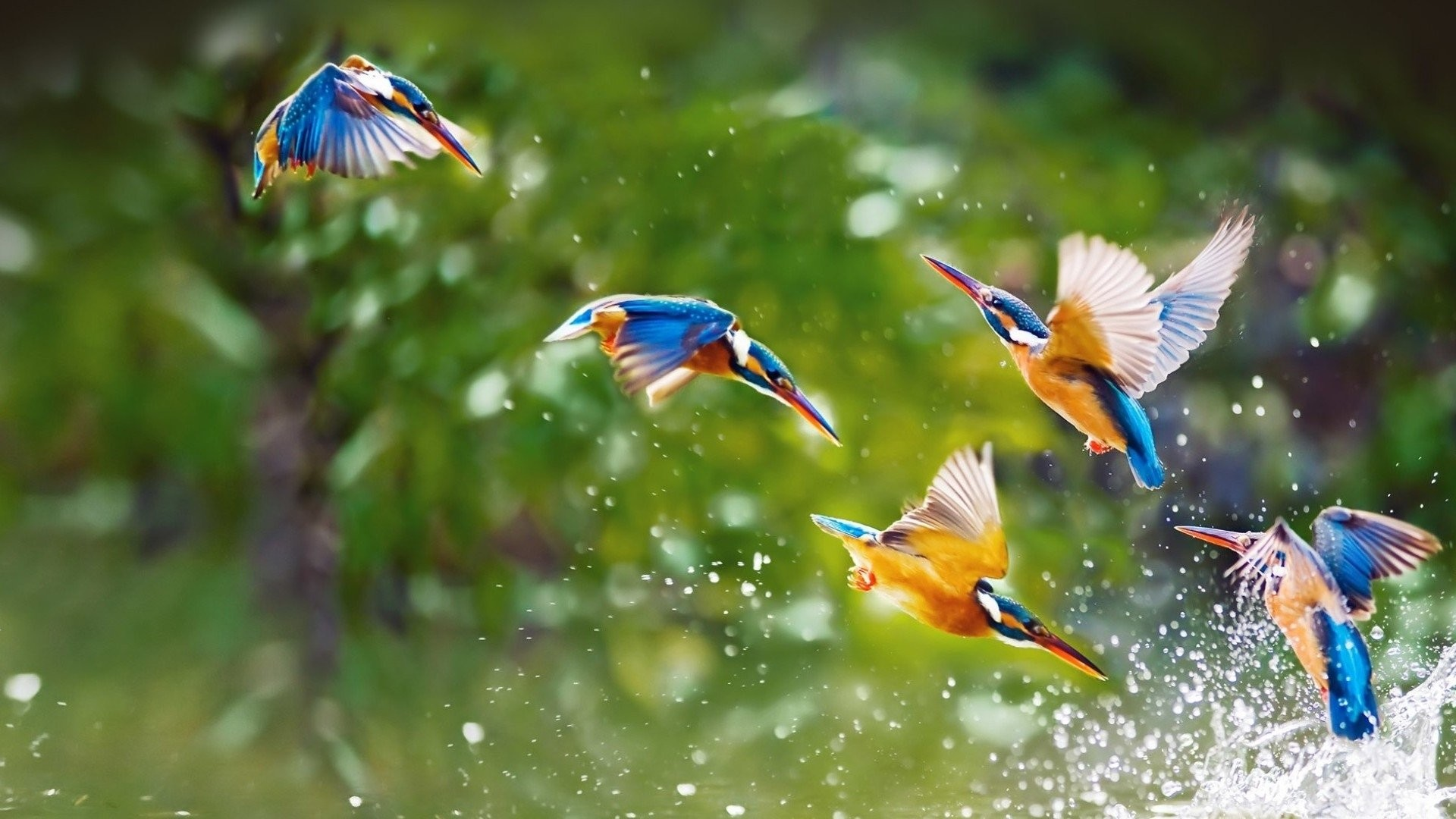 Kingfisher Wallpapers 1
