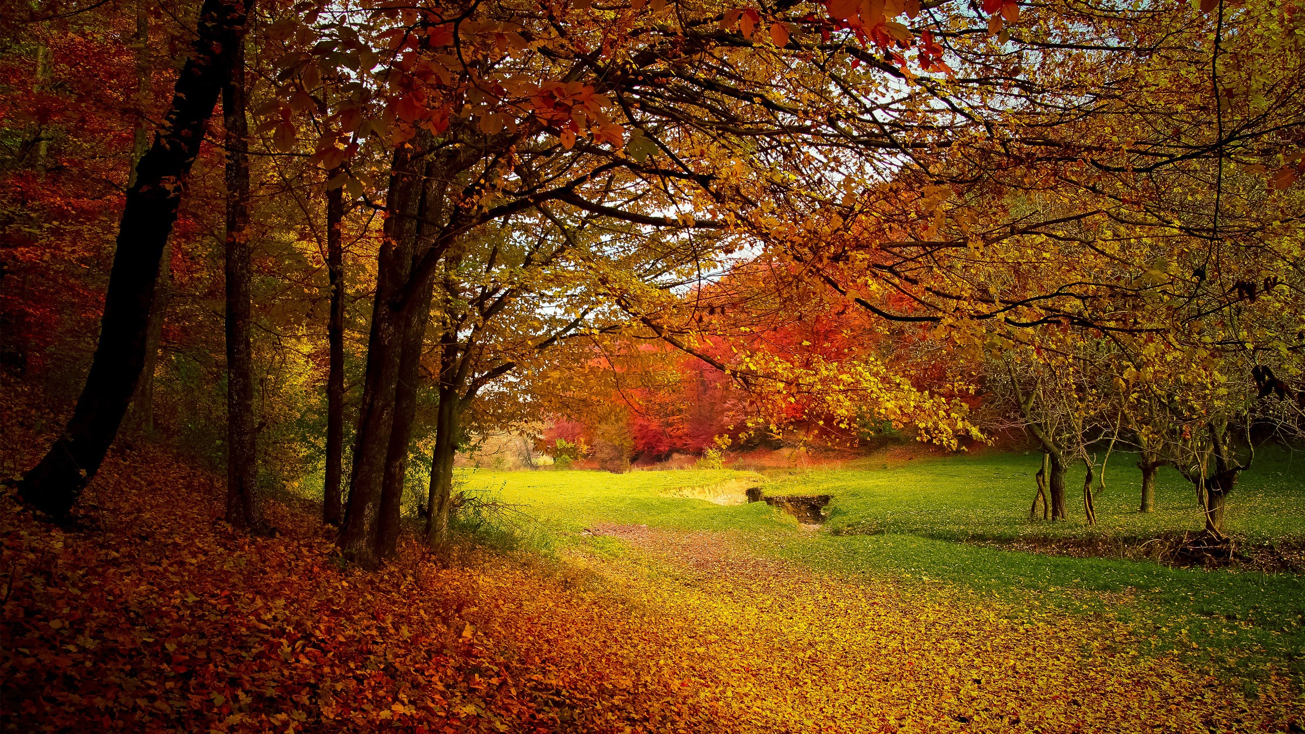 Autumn Wallpaper HD 1 Download Free Wallpapers For Desktop Mobile