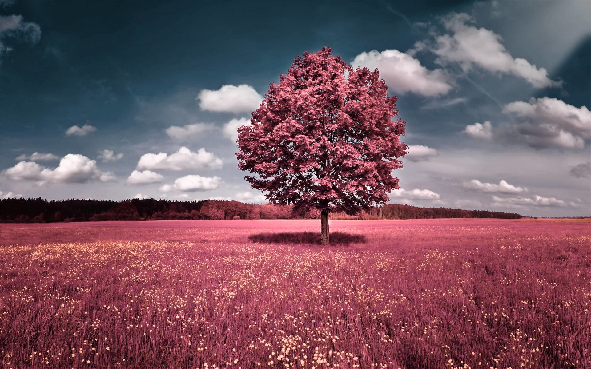 1920x1200 Wallpapers For Pretty Pink Nature Backgrounds