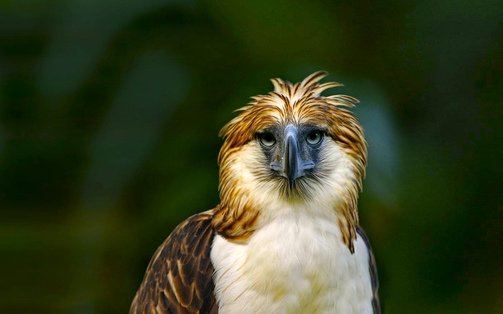 Bird wallpaper download free cool high resolution - Animal and bird hd wallpaper ...