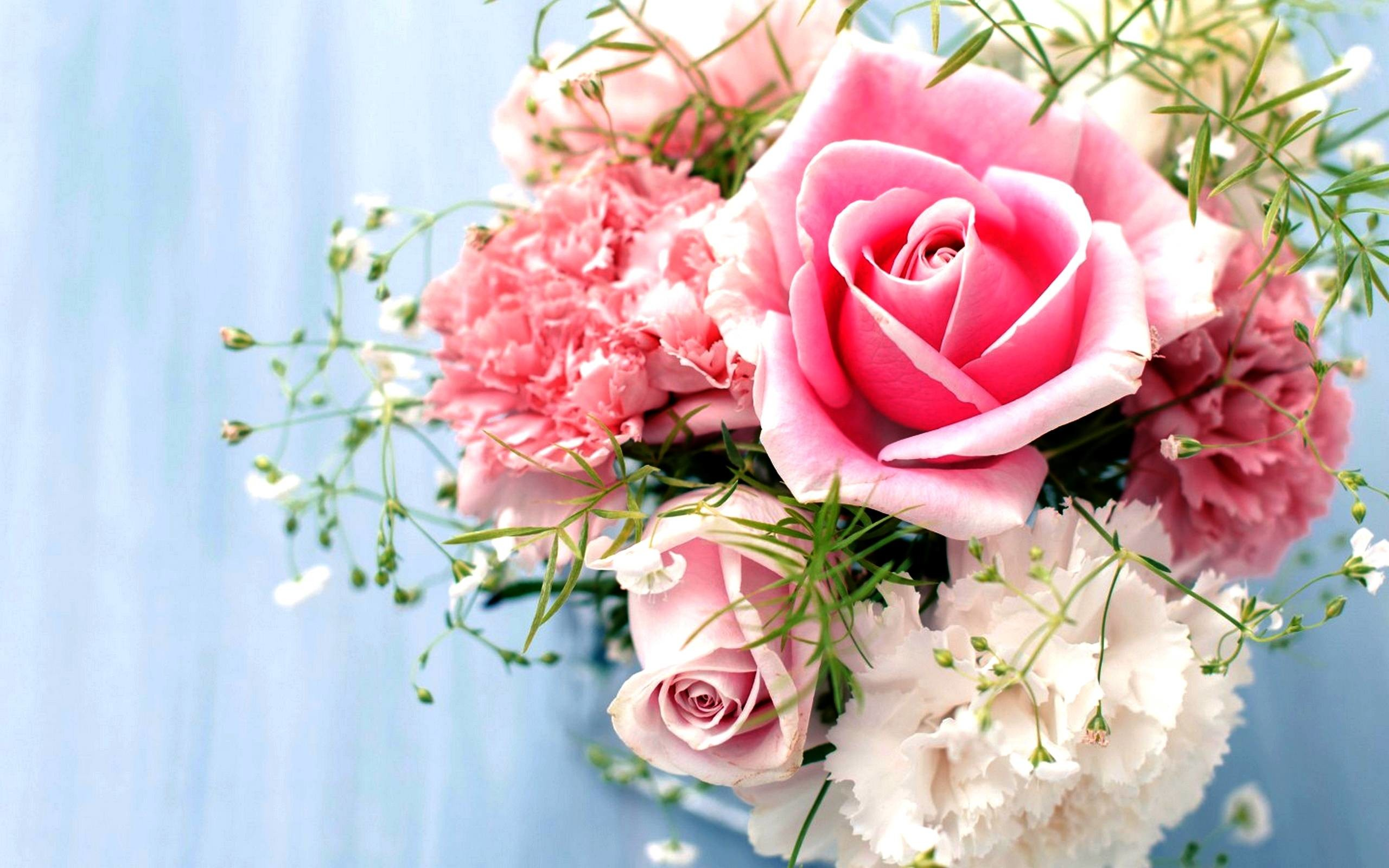 Pink Rose Wallpaper ·① WallpaperTag
