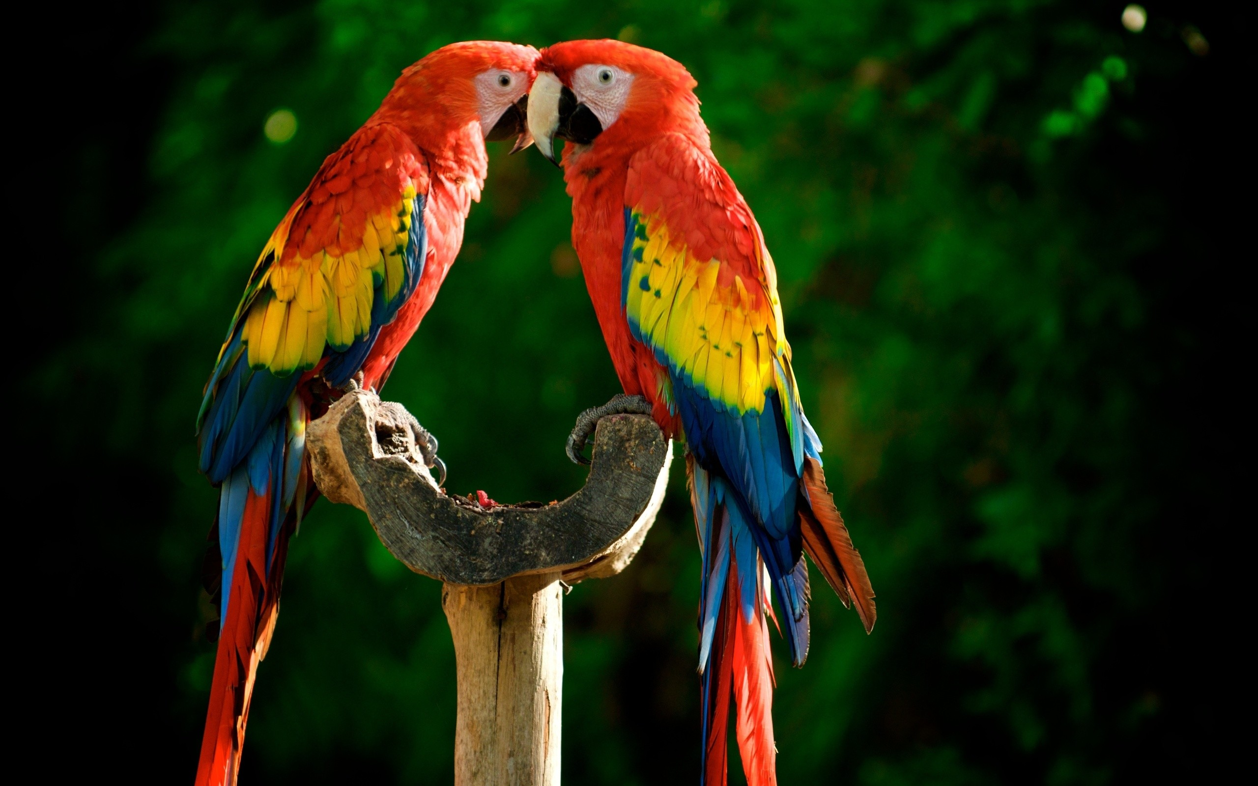 Colorful Parrot Birds Images Photos Wallpapers