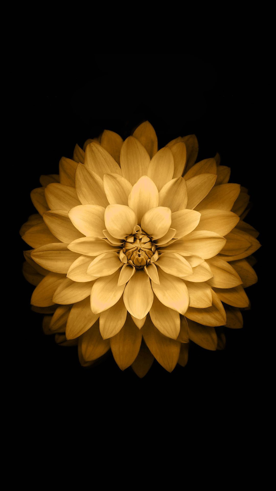 1080x1920 golden lotus flower ios android wallpaper