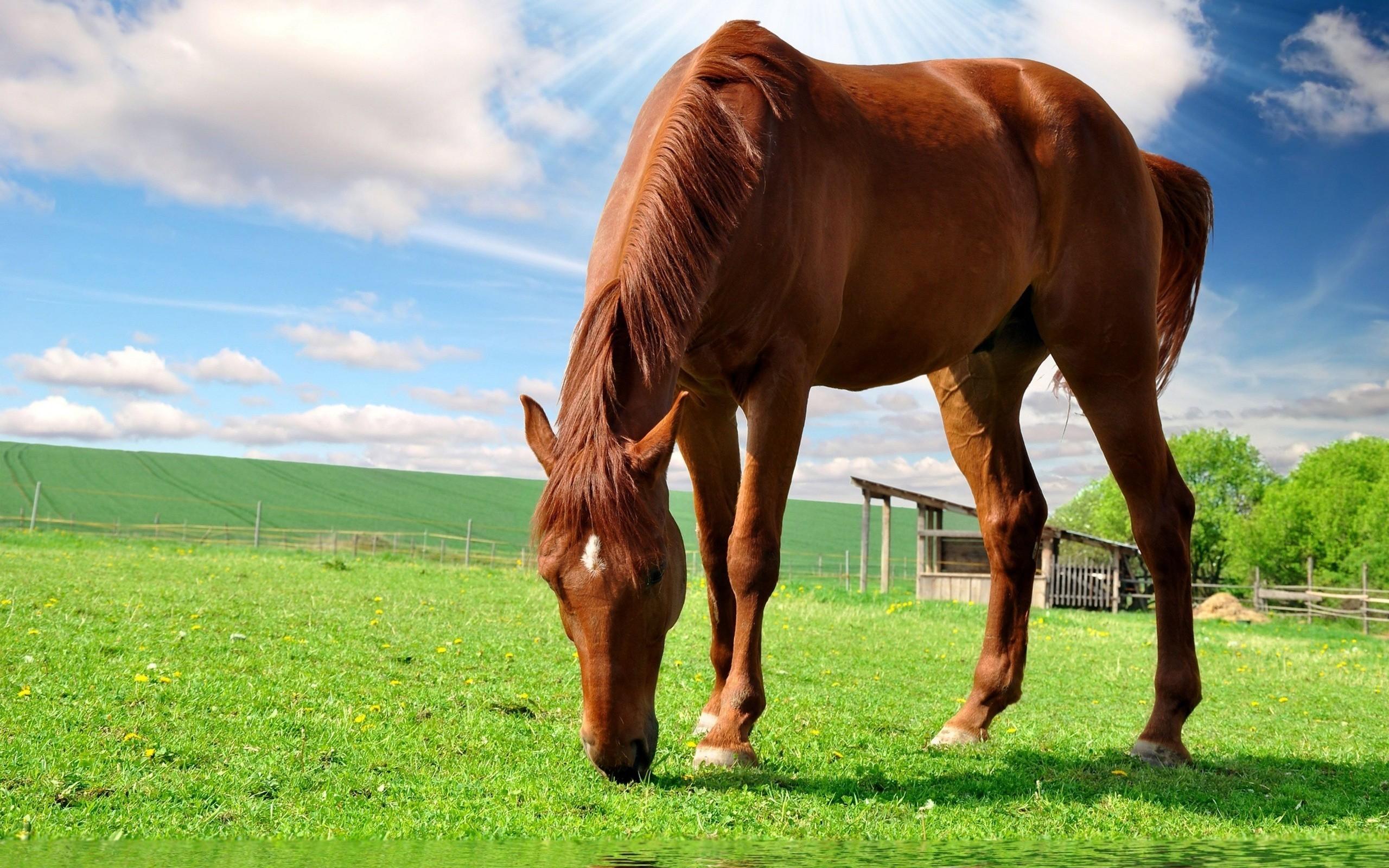 Horse Wallpaper For Computer Wallpapertag