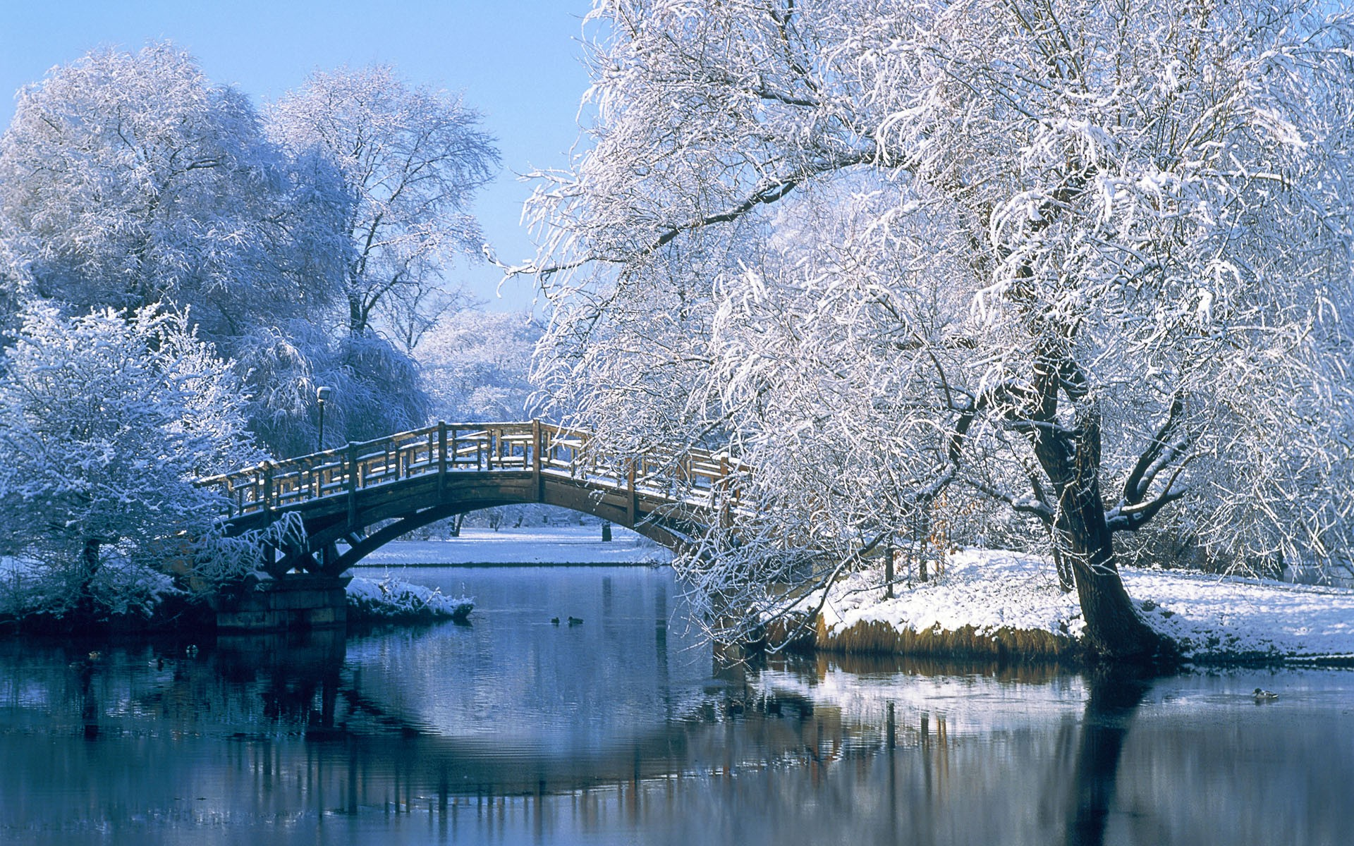 Winter Desktop Wallpaper Download Free Cool High Resolution