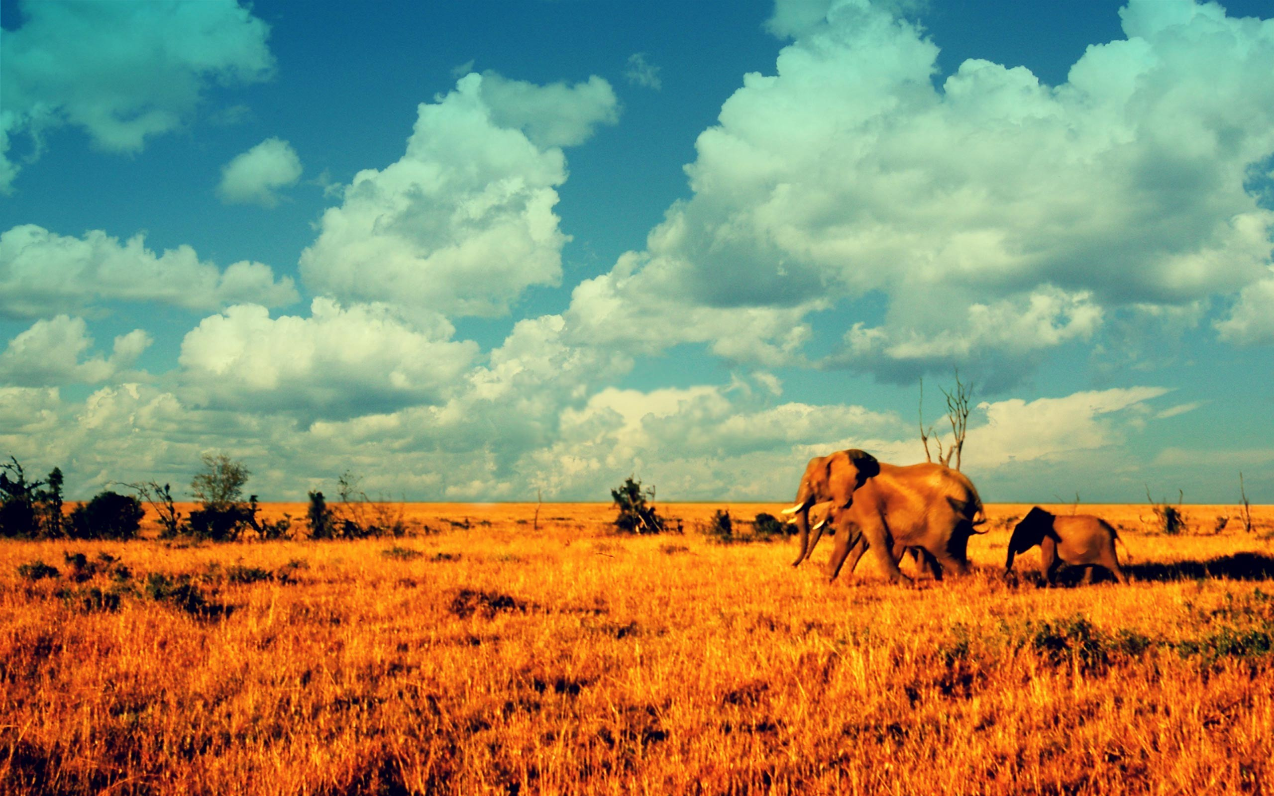 African Background 1 Download Free Stunning Wallpapers For Desktop