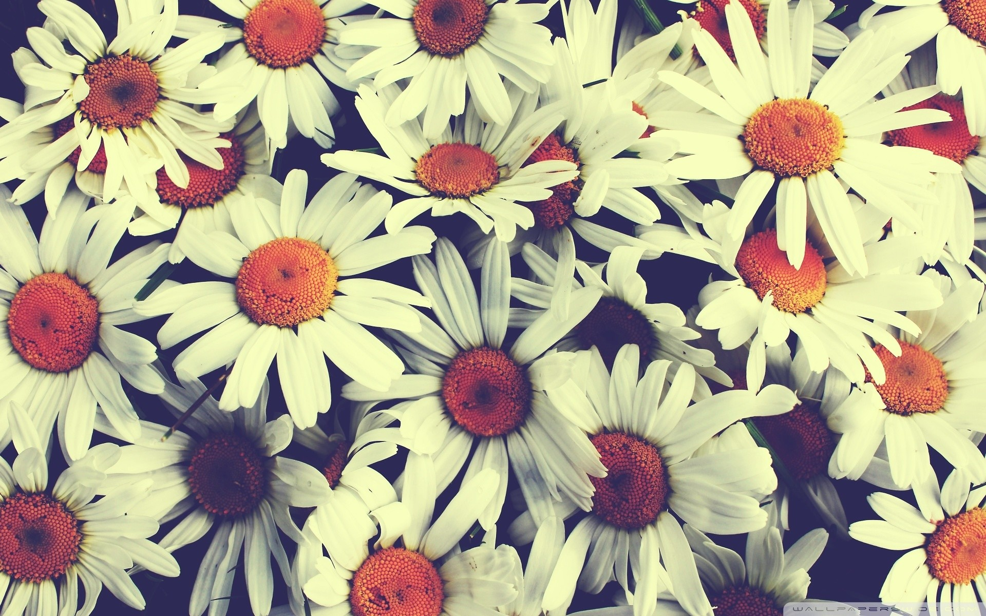 pretty floral backgrounds