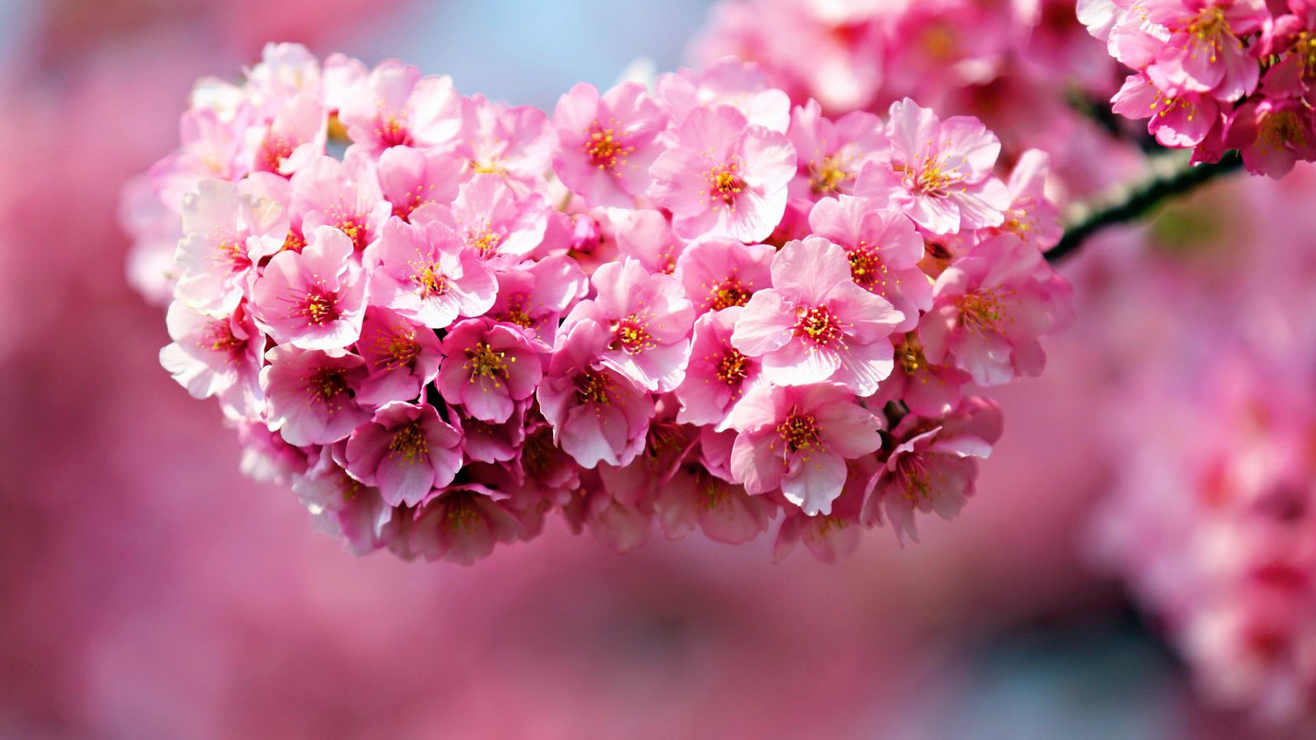 1920x1080 40 Beautiful Flower Wallpapers For Your Desktop
