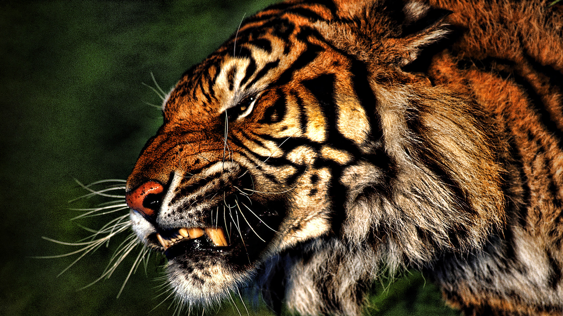 10 Most Popular Wild Animals Wallpapers Free Download Full: Wild Animals Wallpaper ·①
