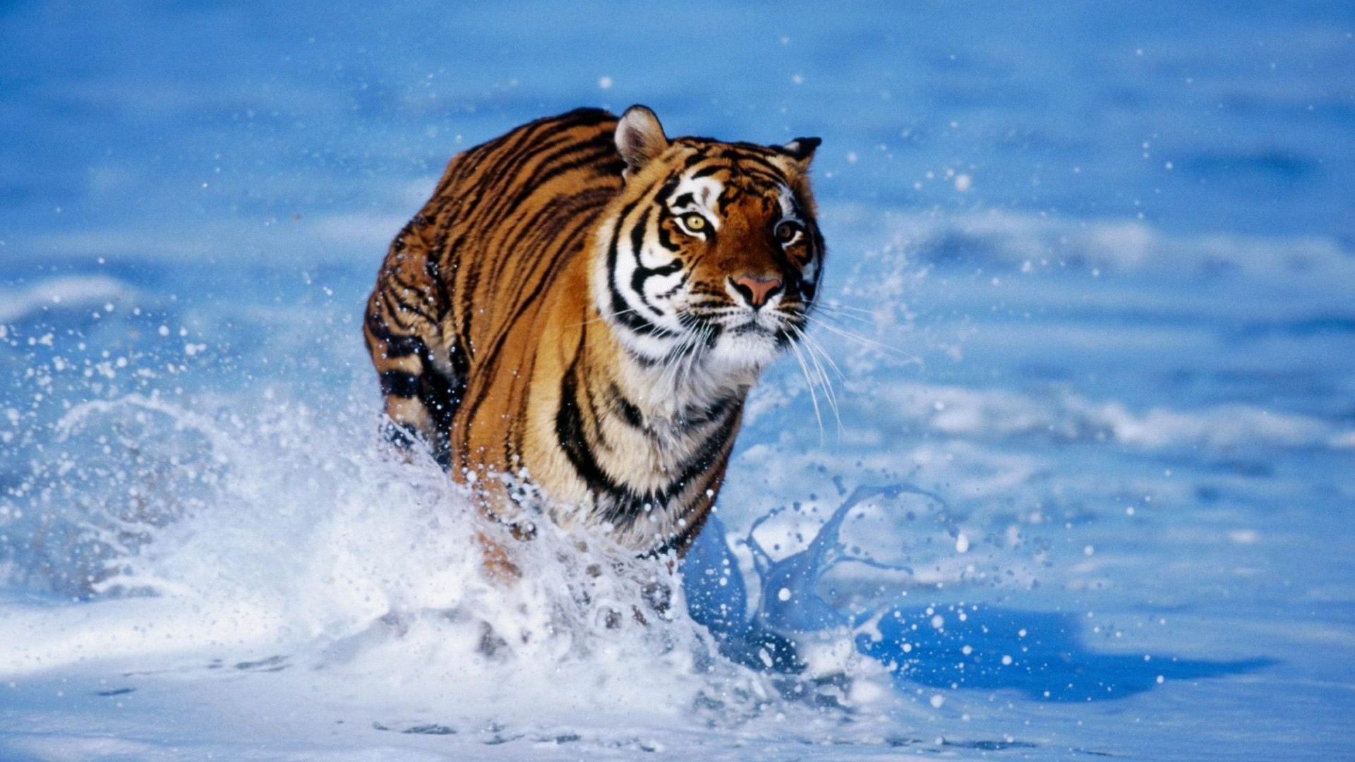 Cool Animal Wallpapers Mobile