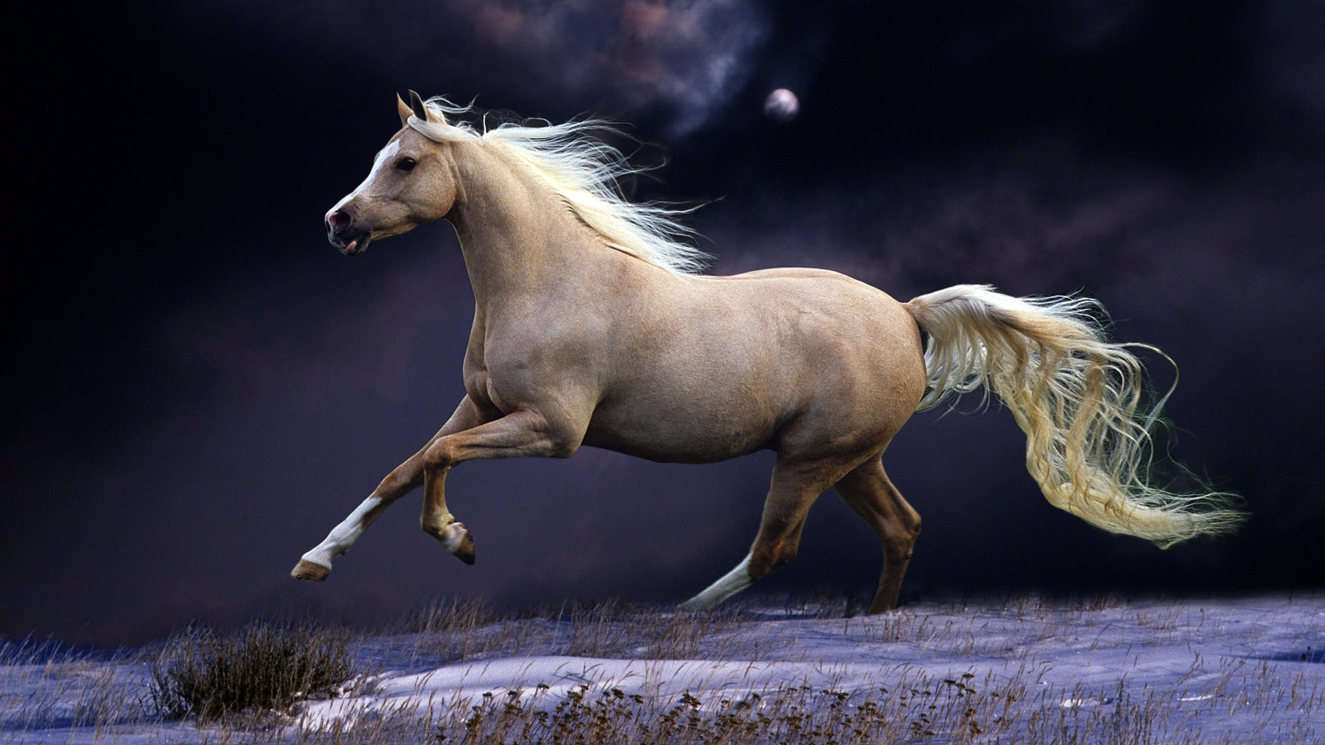 Horse Desktop Backgrounds Wallpapertag
