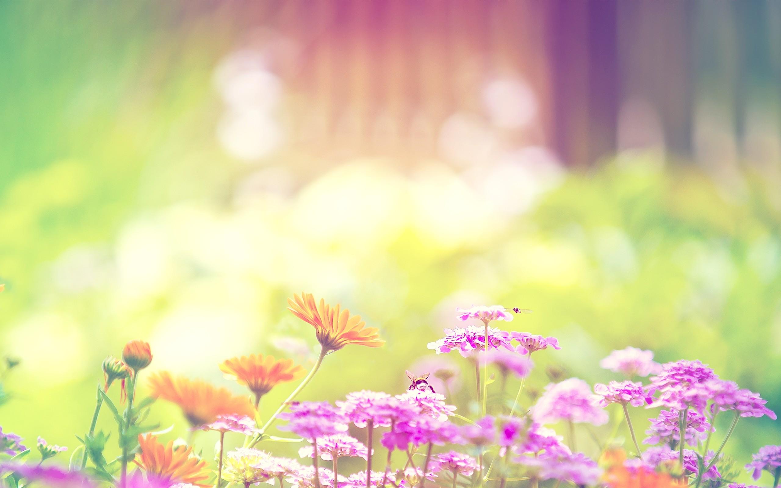 Spring flowers background spring flowers background mightylinksfo
