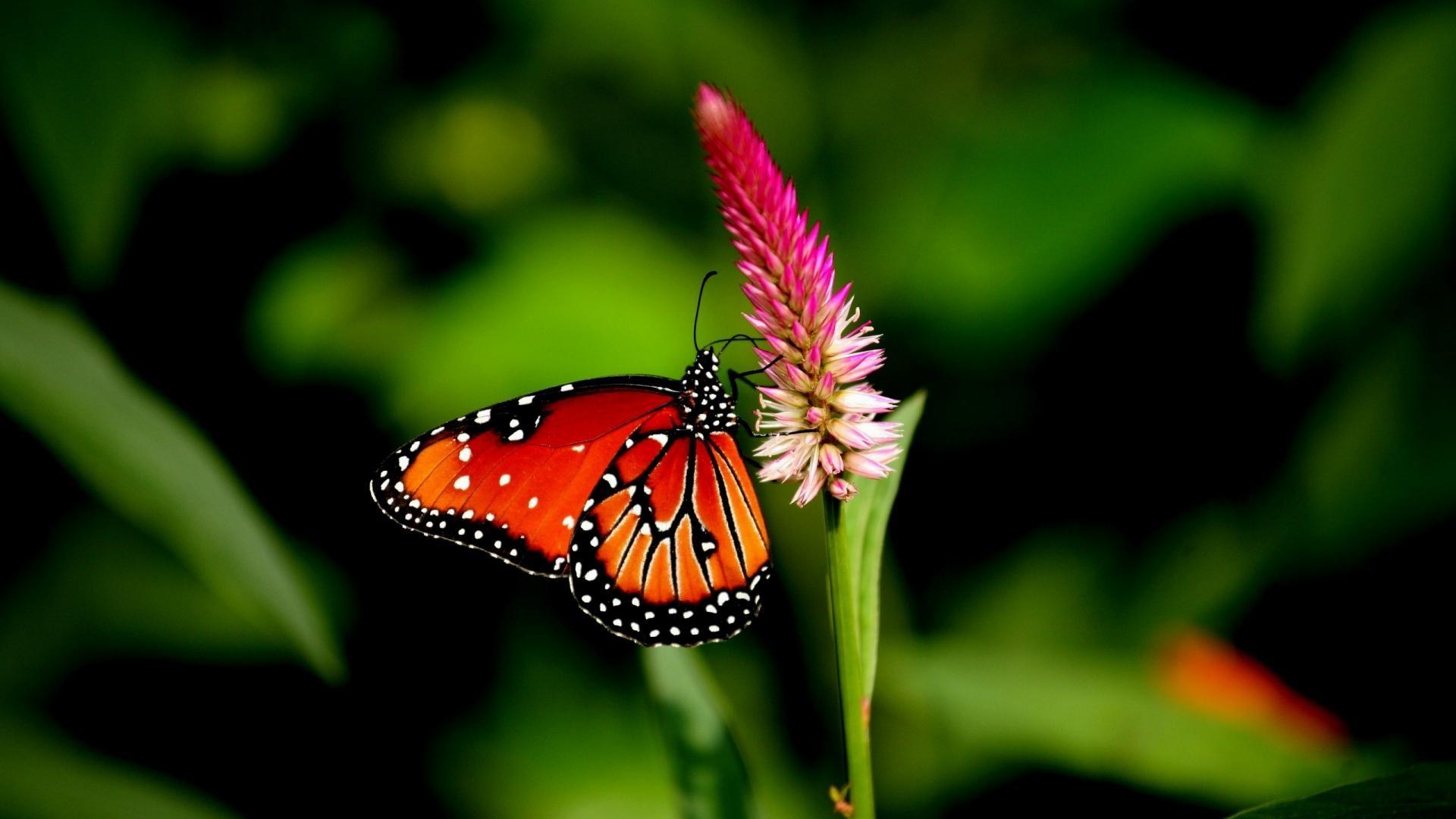 Разные бабочки  № 2033658 бесплатно