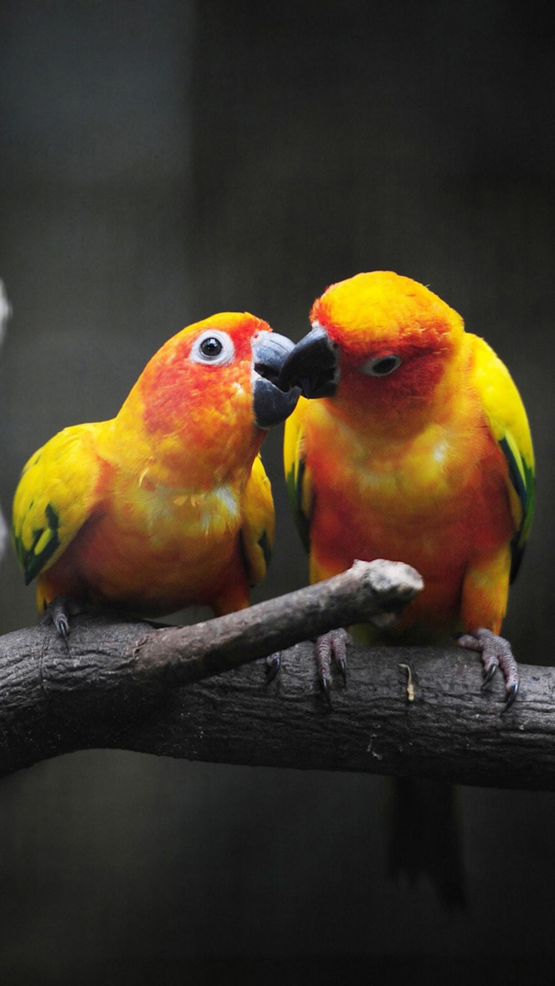 love bird wallpapers free download - love birds iphone hd wallpaper