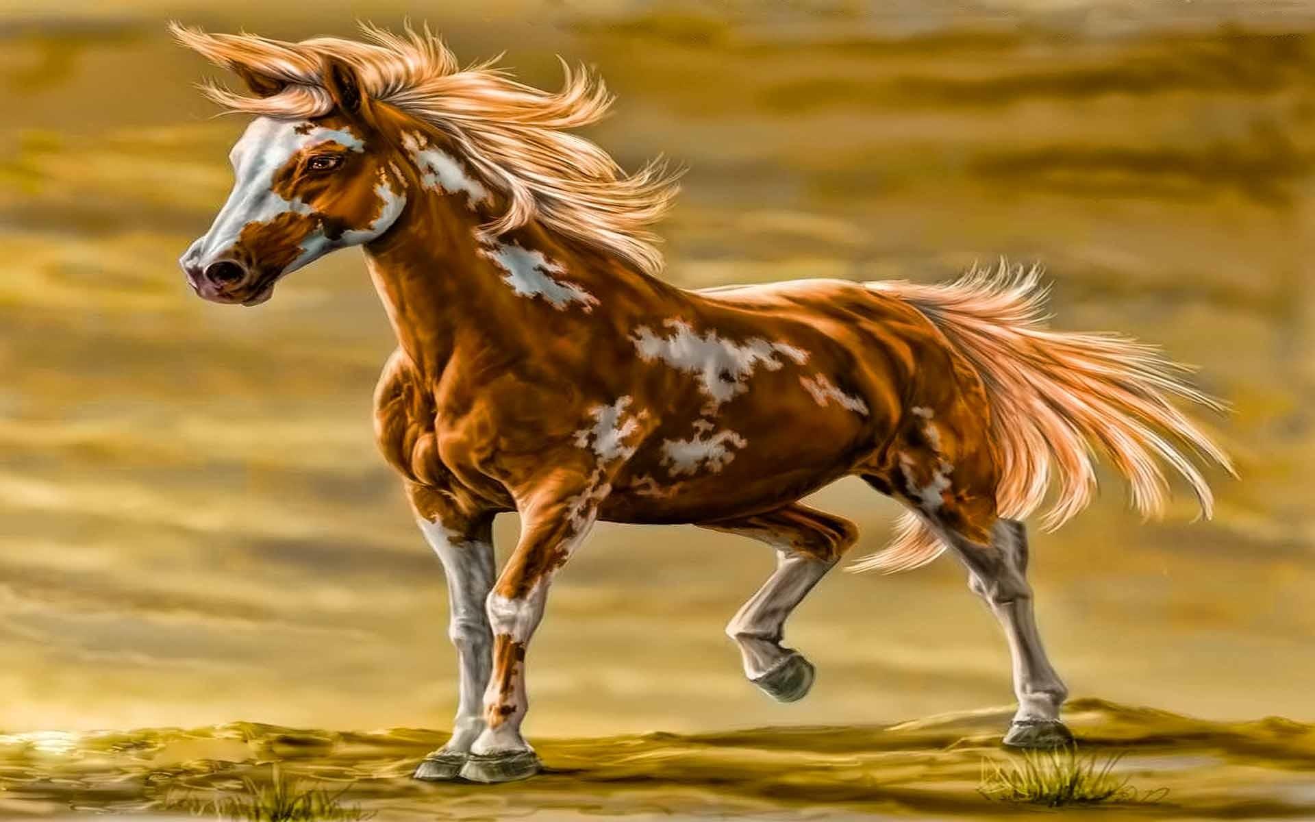 Paint Horse Wallpaper 1