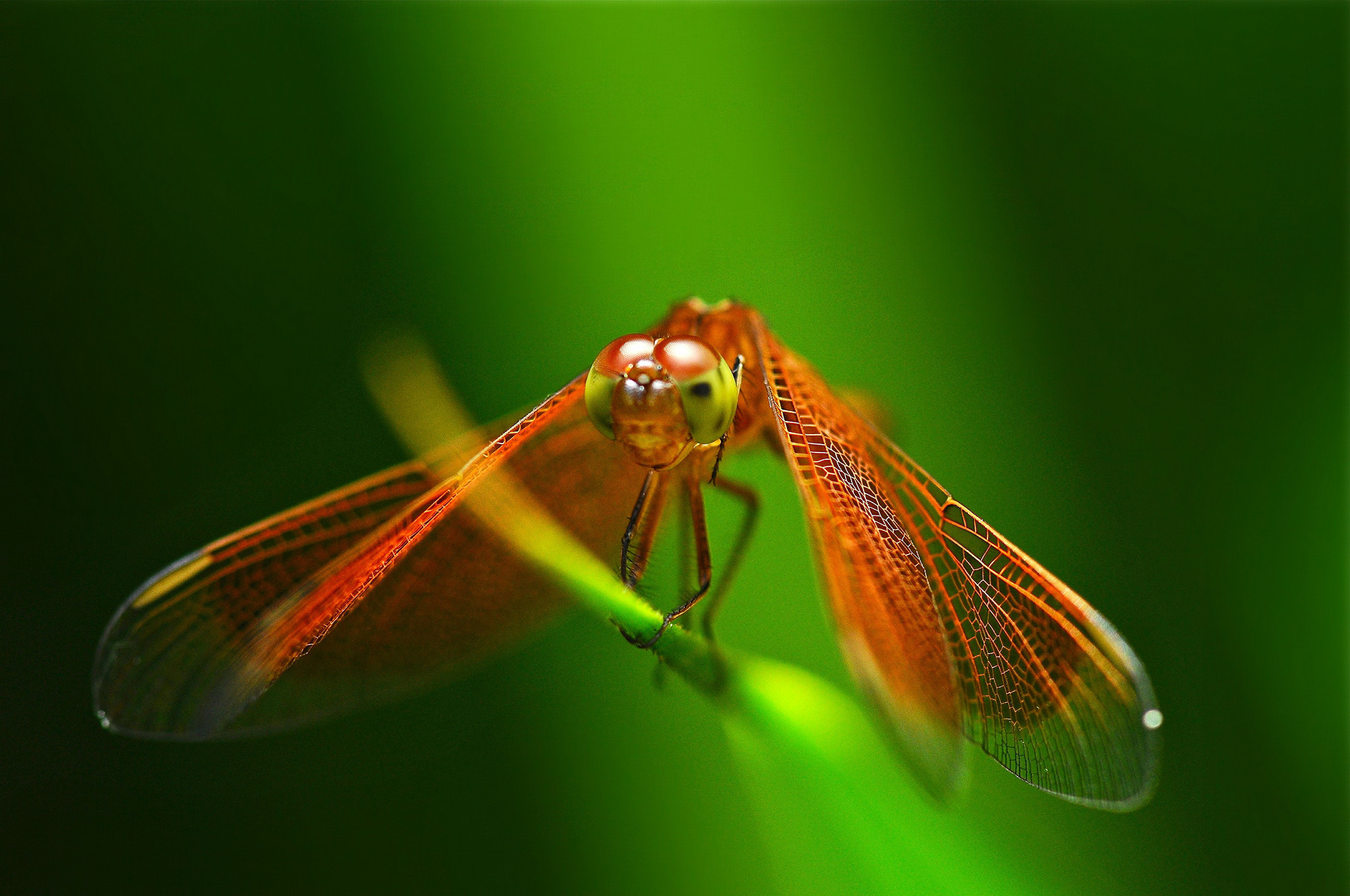 Insects Dragonfly Bug Macro Photo Hd Insects for HD High