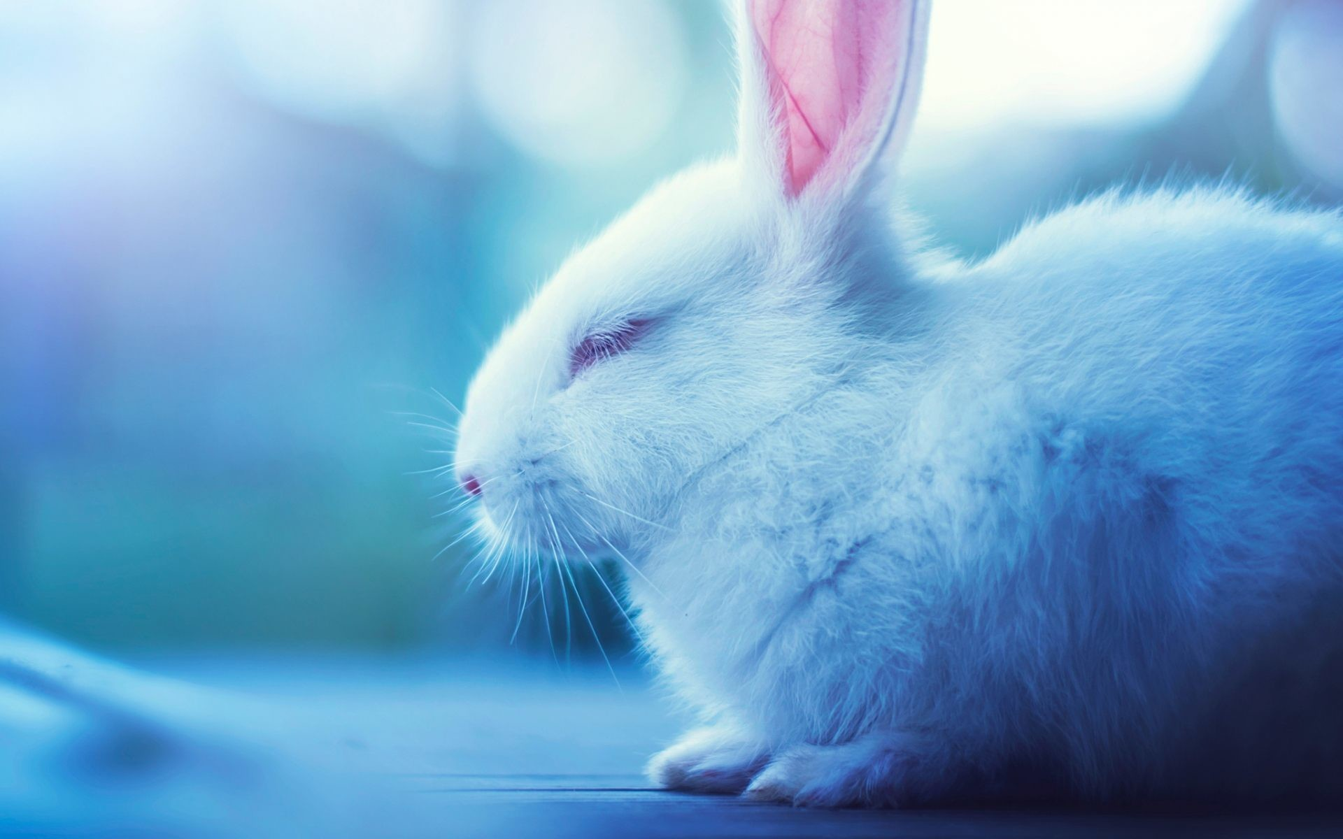 Cute Bunny Wallpapers ·① WallpaperTag