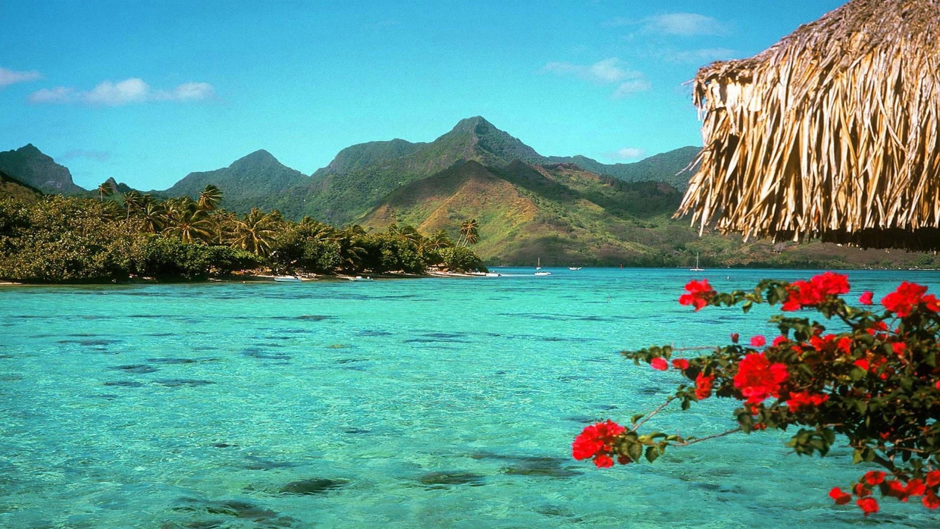 tropical desktop backgrounds 183�� wallpapertag