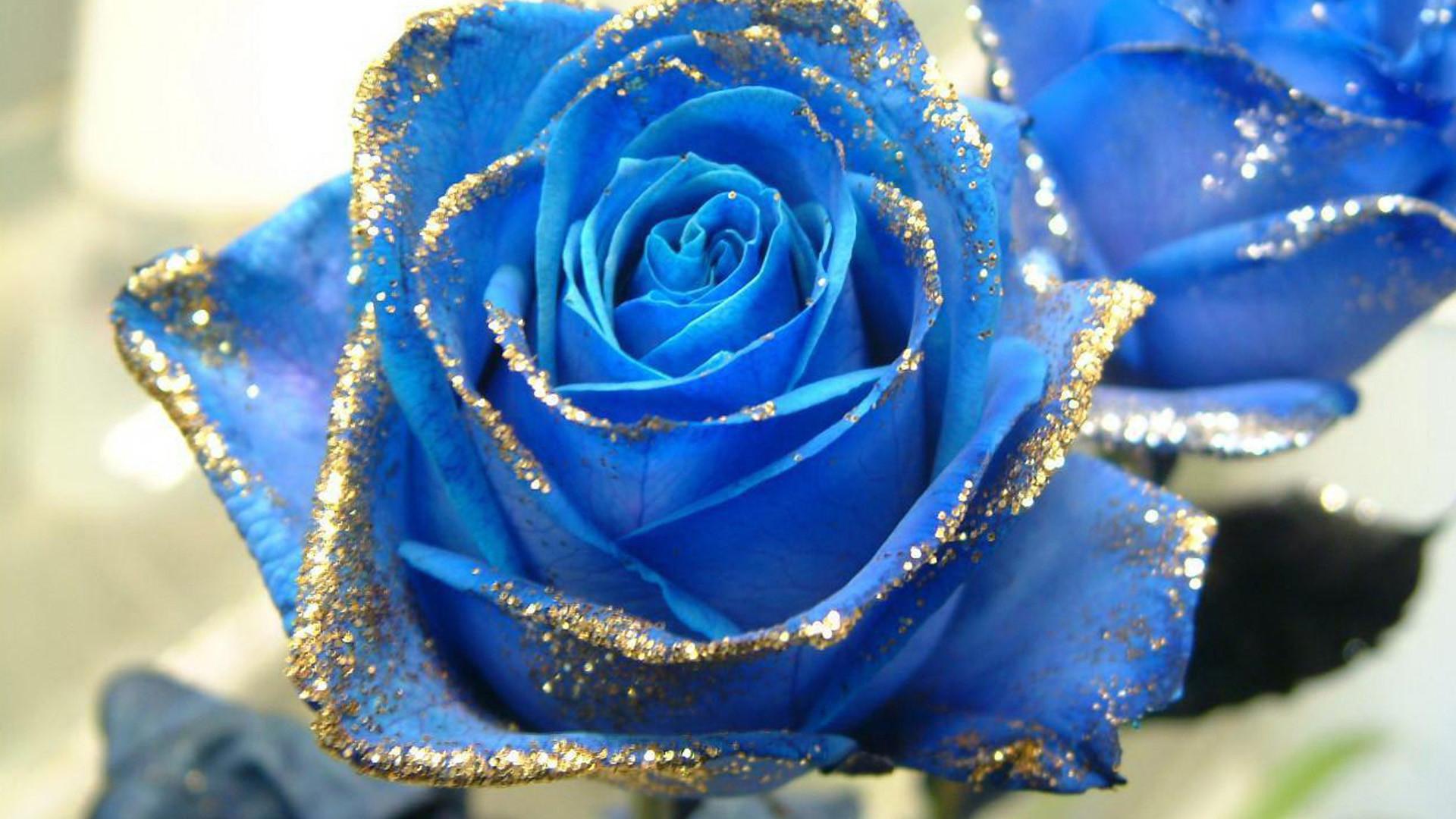 Синие цветы фото ты