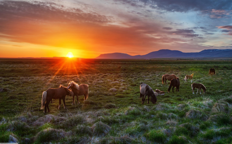 Wild Horses Wallpaper 1