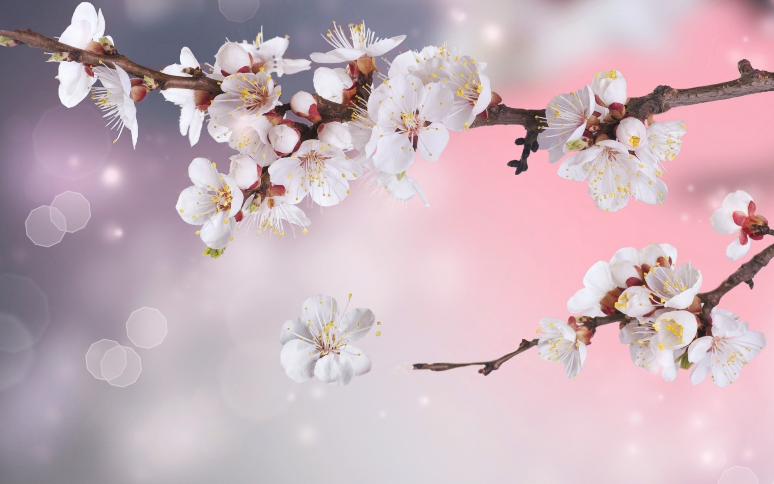 Sakura Flower Wallpaper ·① WallpaperTag