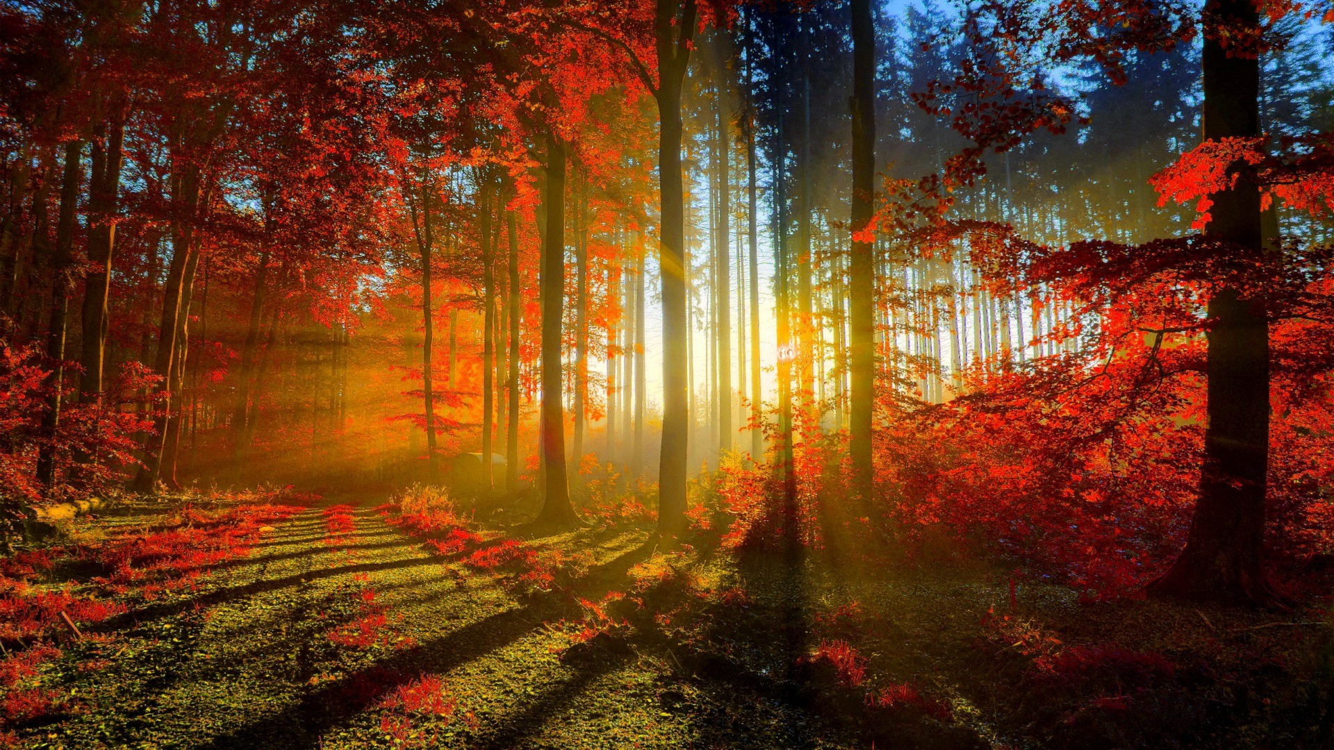 autumn wallpaper widescreen download free amazing high