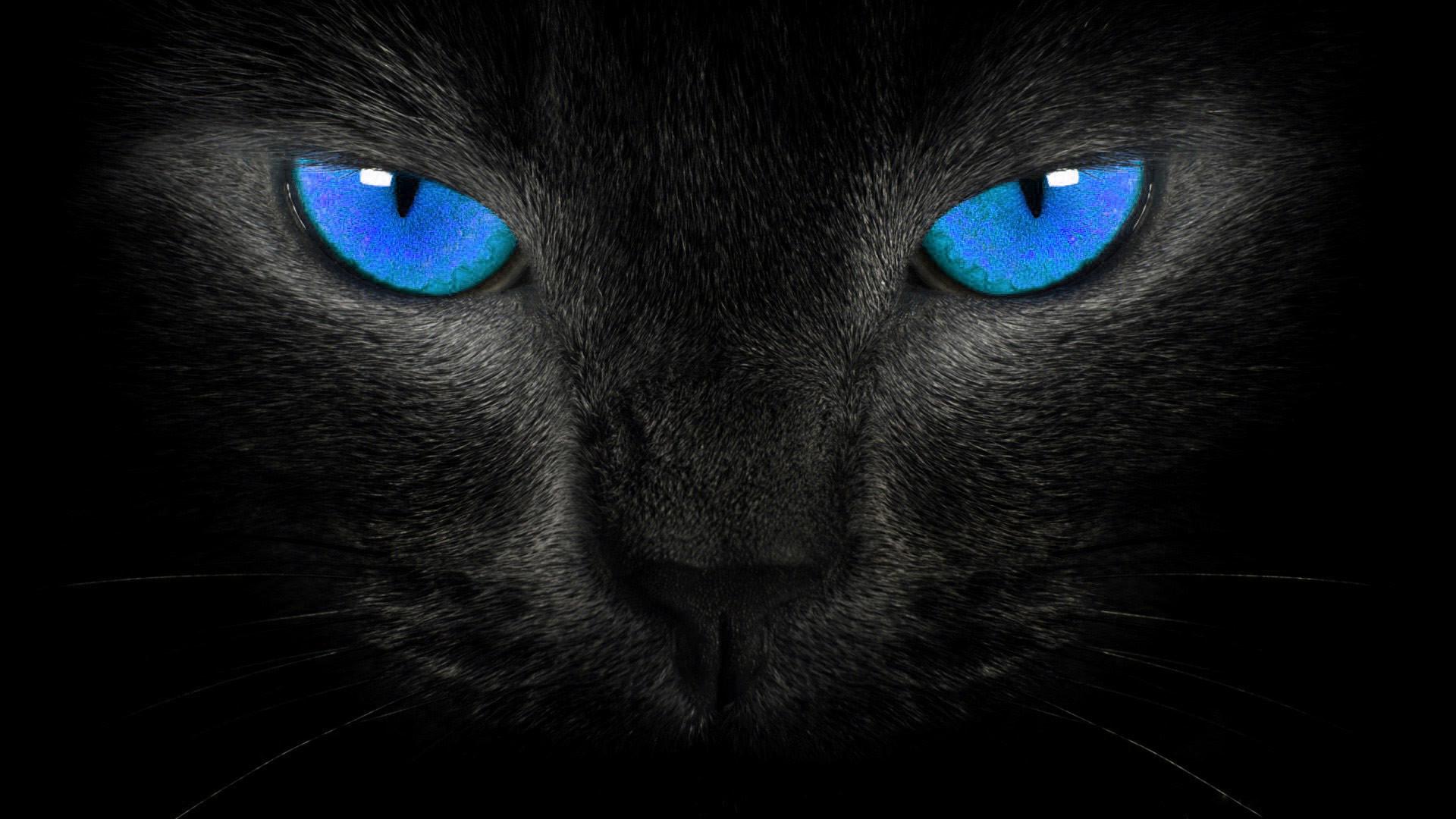 кошка глаза шерсть  № 1963624  скачать