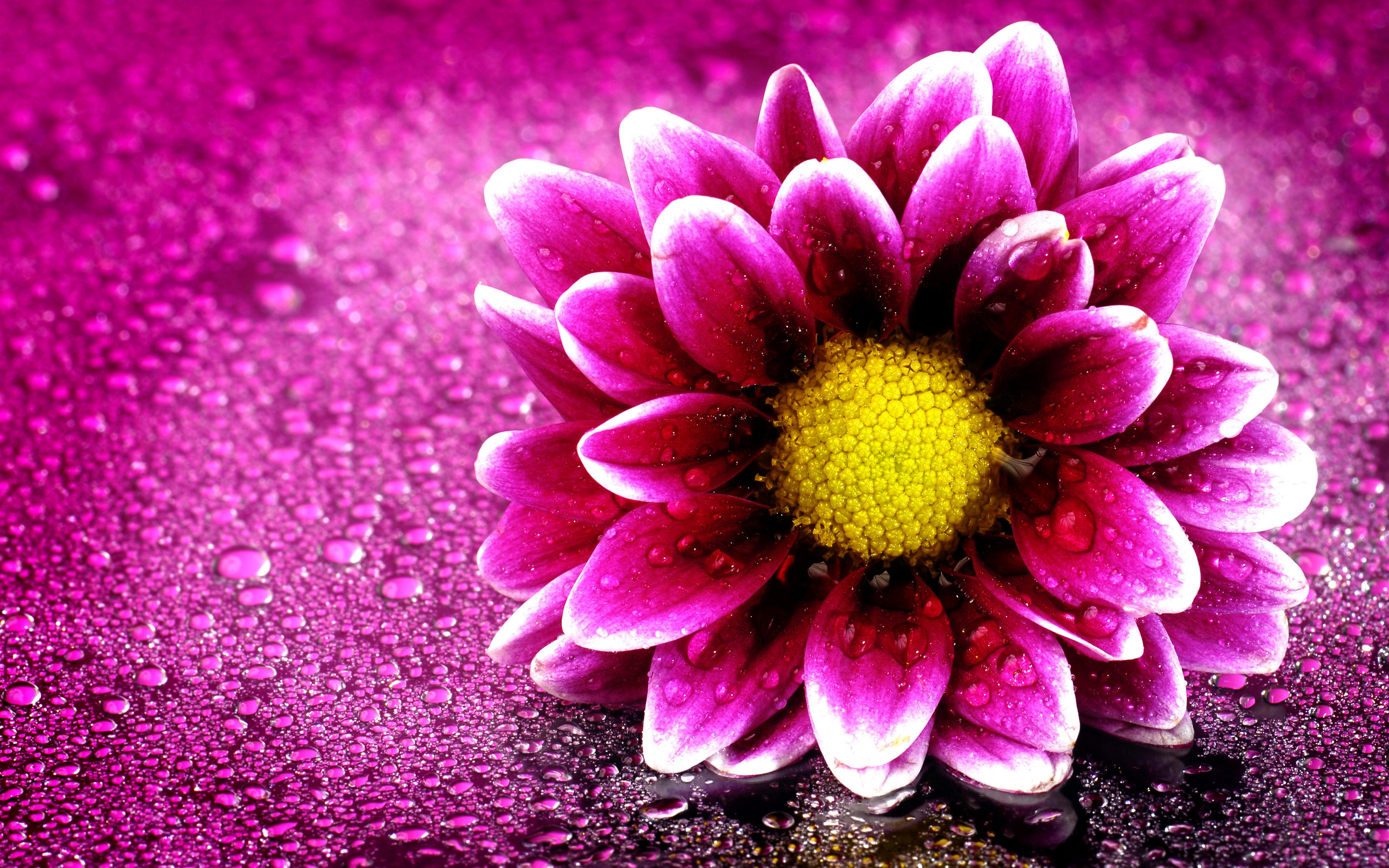 Pink Flower Desktop Wallpaper ·① WallpaperTag