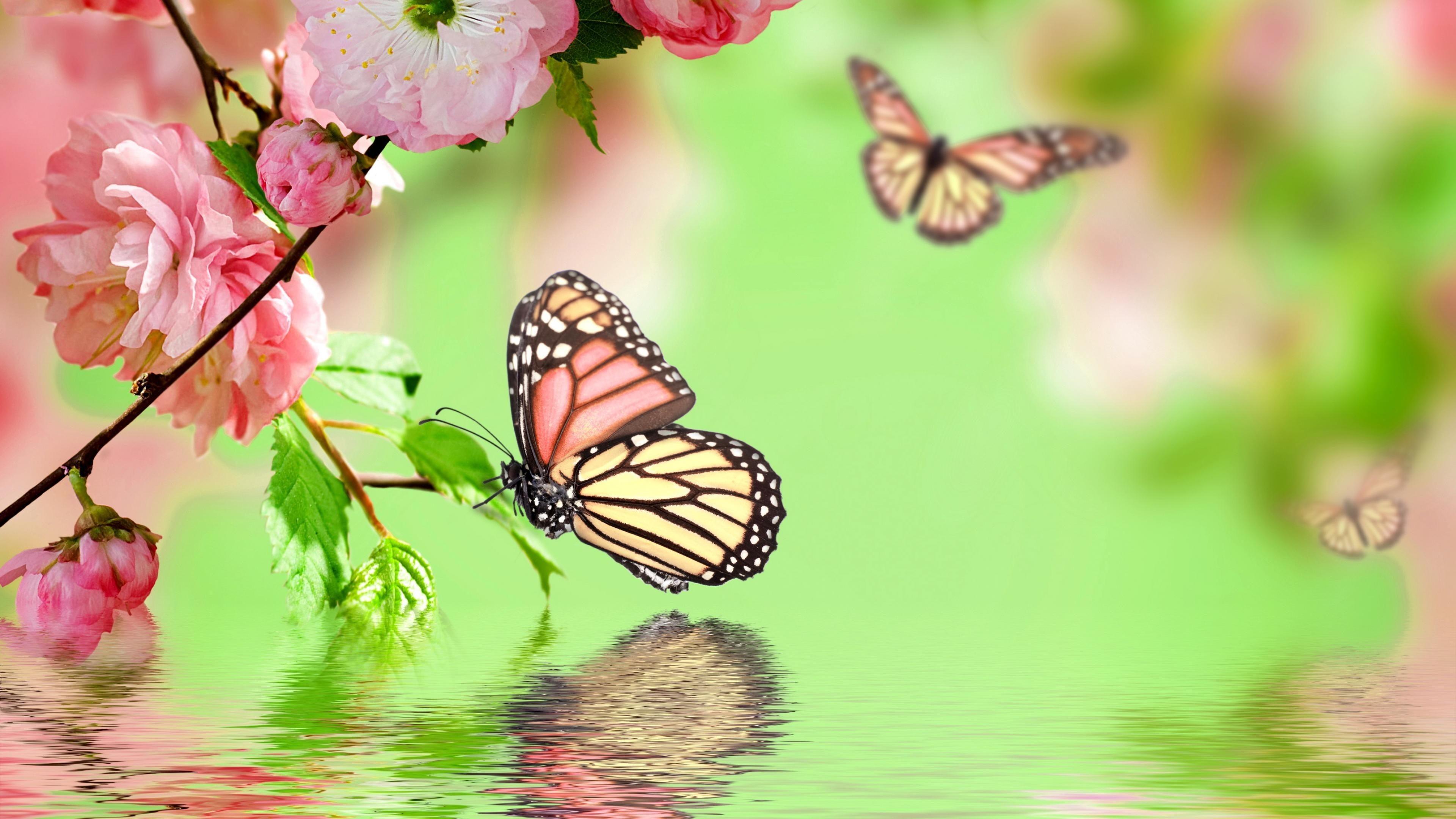 Wonderful Wallpaper Home Screen Butterfly - 612497-cool-wallpaper-butterflies-3840x2160  HD_659766.jpg