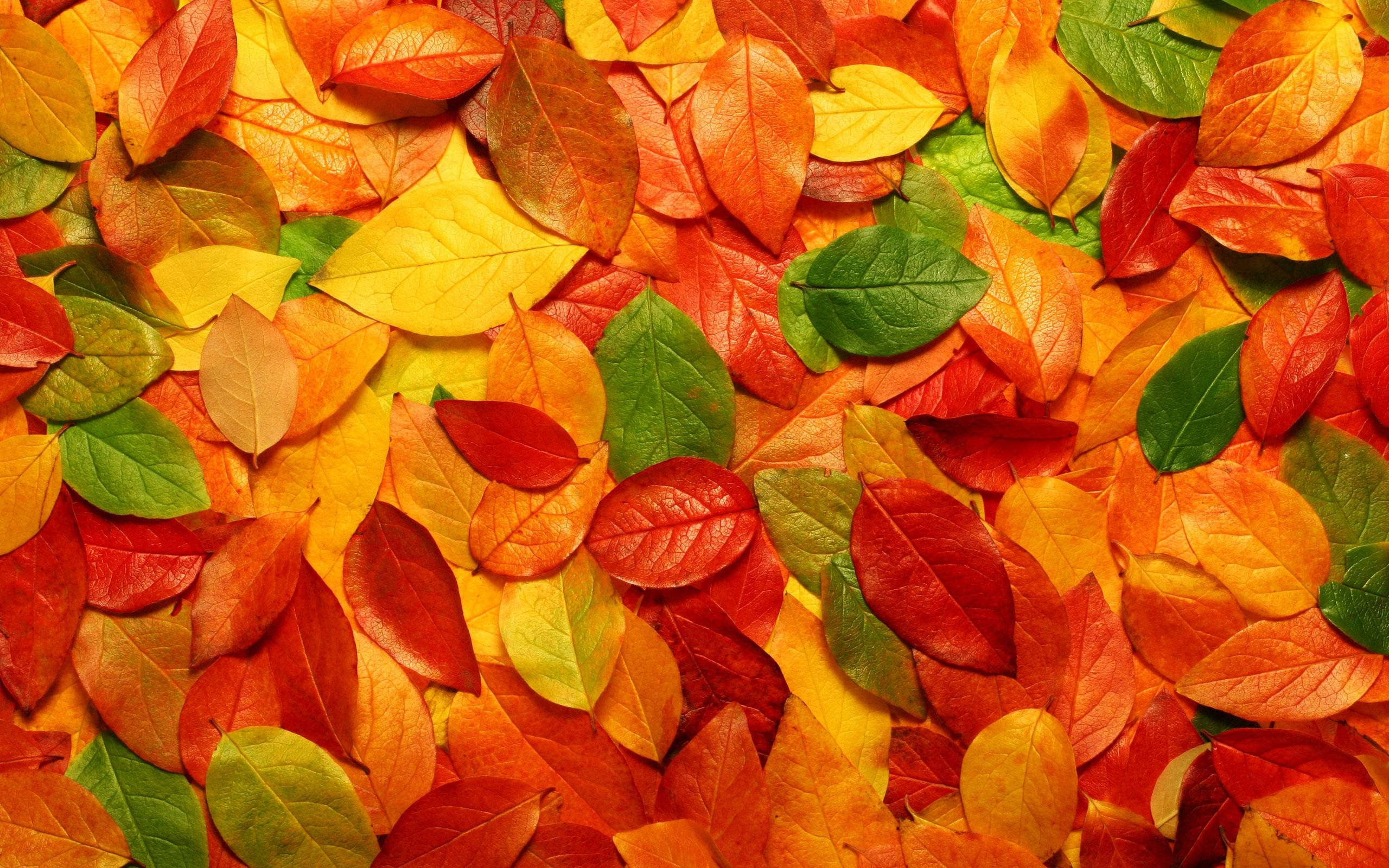 2560x1600 desktop wallpaper fall foliage www