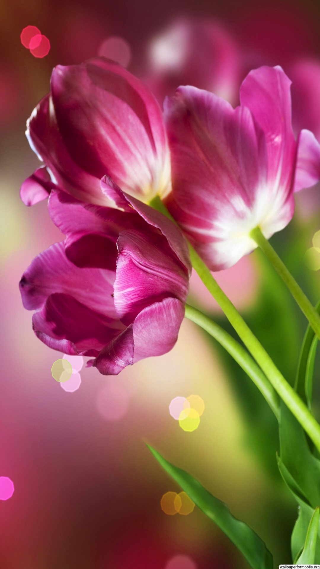 Pictures of beautiful flowers wallpapers wallpapertag - Beautiful flower images wallpapers ...