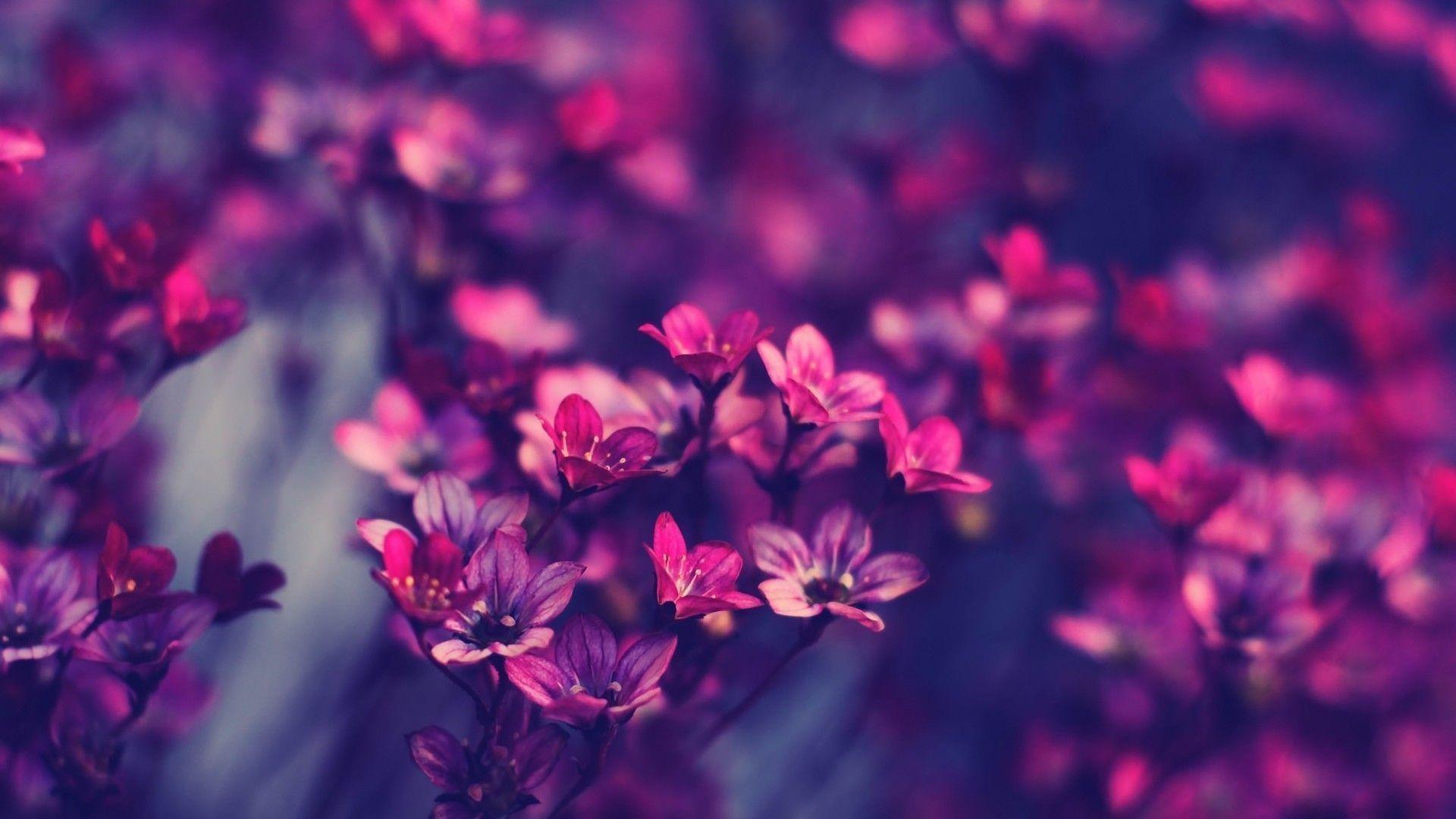 Desktop Wallpaper Flowers Wallpapertag